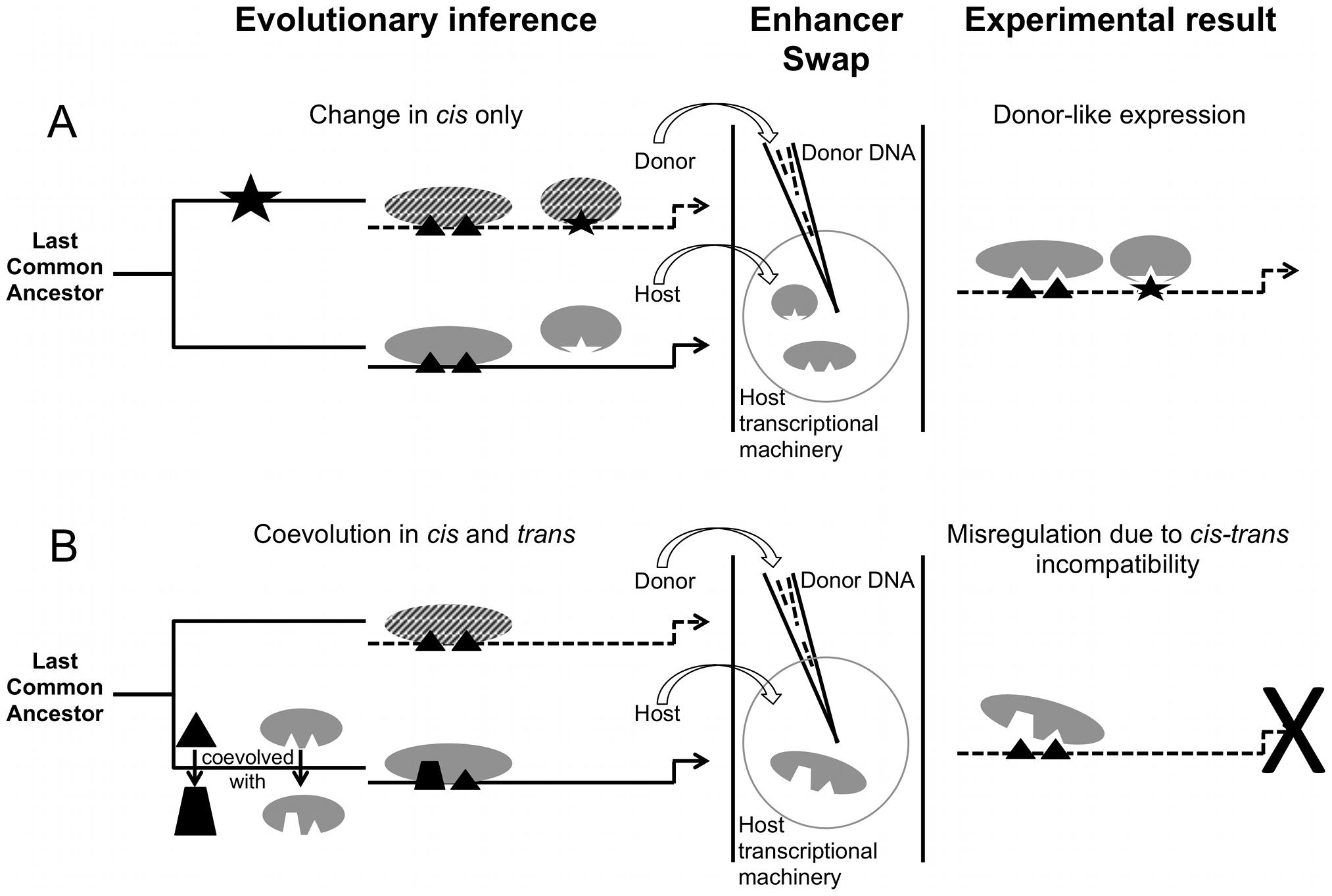 Divergence and misregulation proceed through different molecular mechanisms.