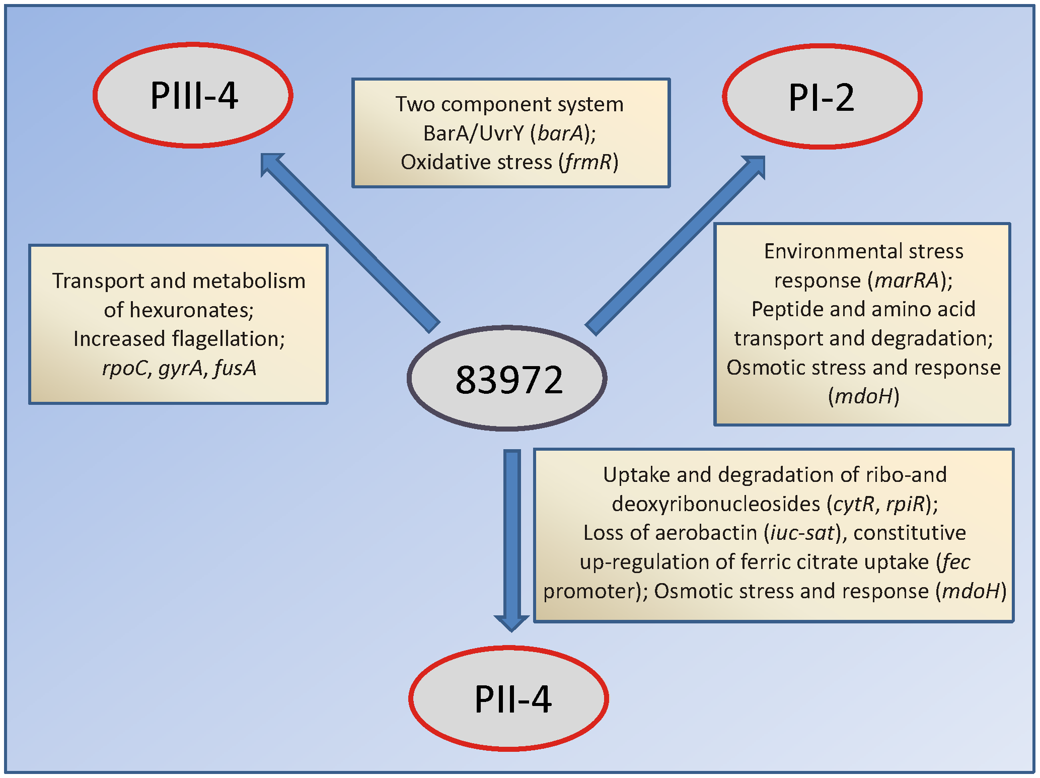 Different adaptational strategies of <i>E. coli</i> 83972 upon prolonged growth in the urinary bladder of human hosts.