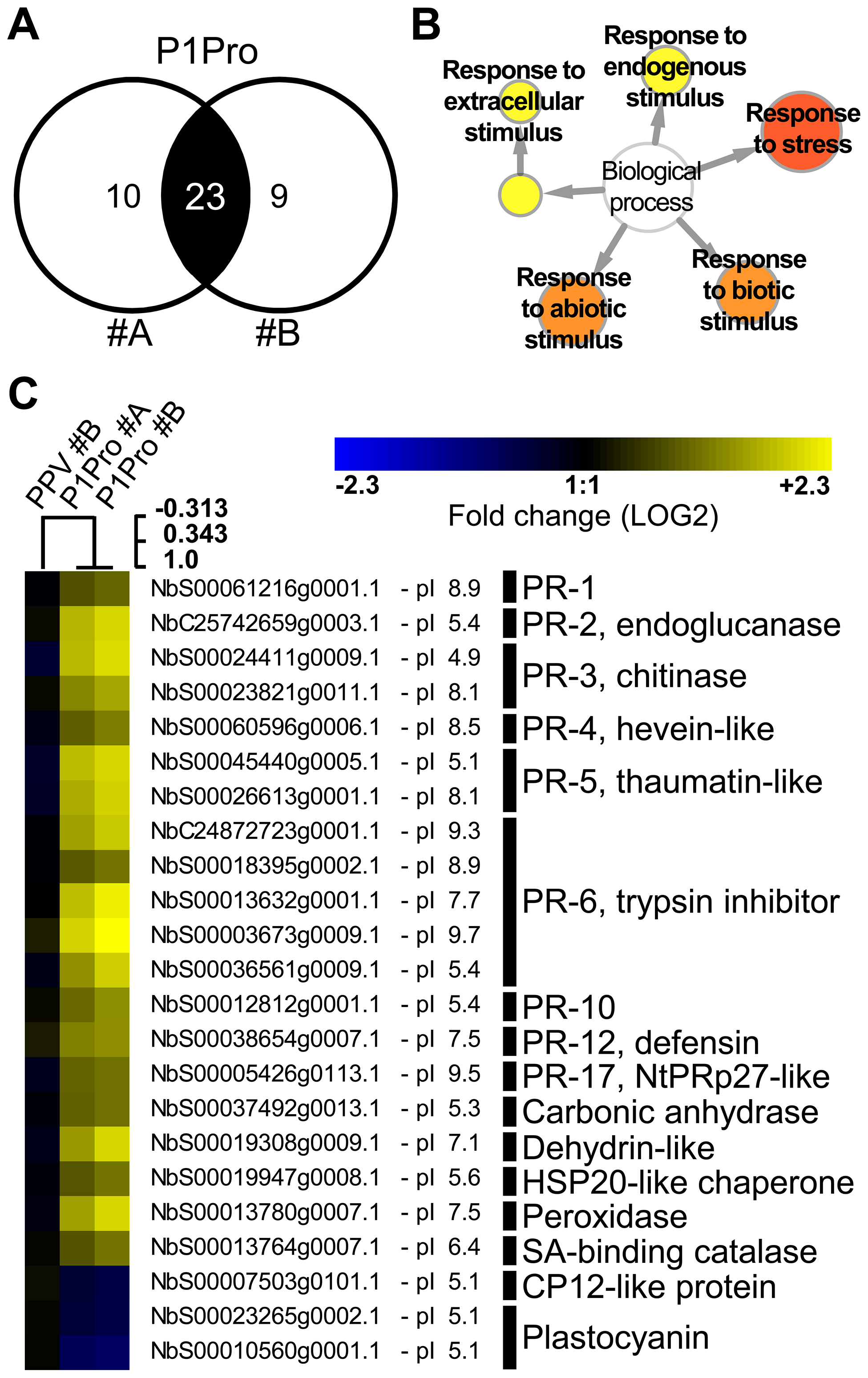 Quantitative proteomic analysis of PPV P1Pro-infected NahG plants.