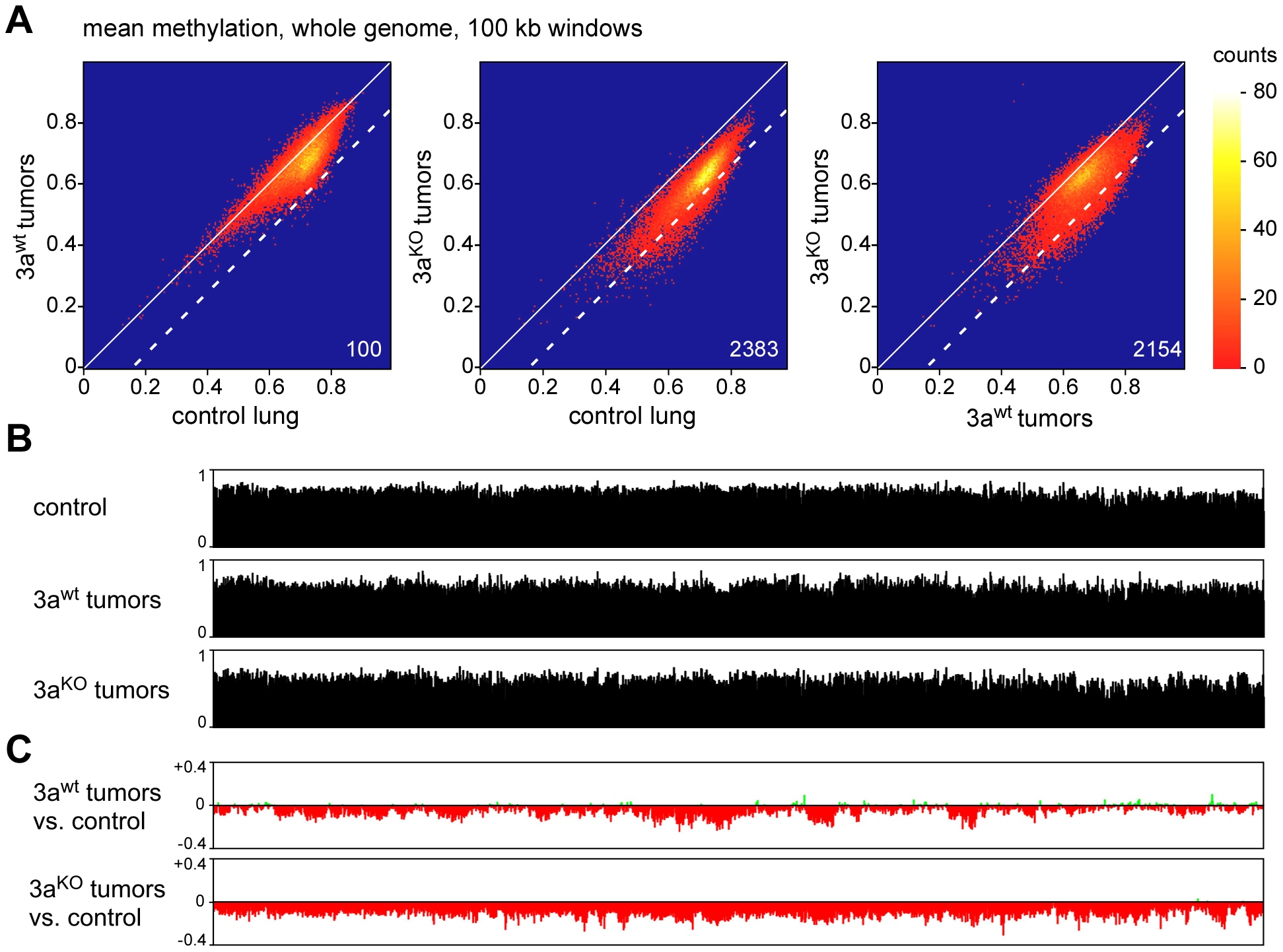 Analysis of large-scale DNA methylation patterns.
