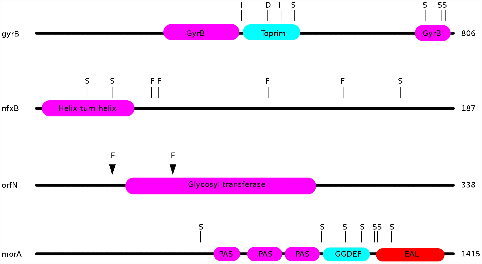 Locations of mutations in the ciprofloxacin resistance proteins nfxB, orfN, gyrB, and in the putatively mucin-adaptive protein morA.