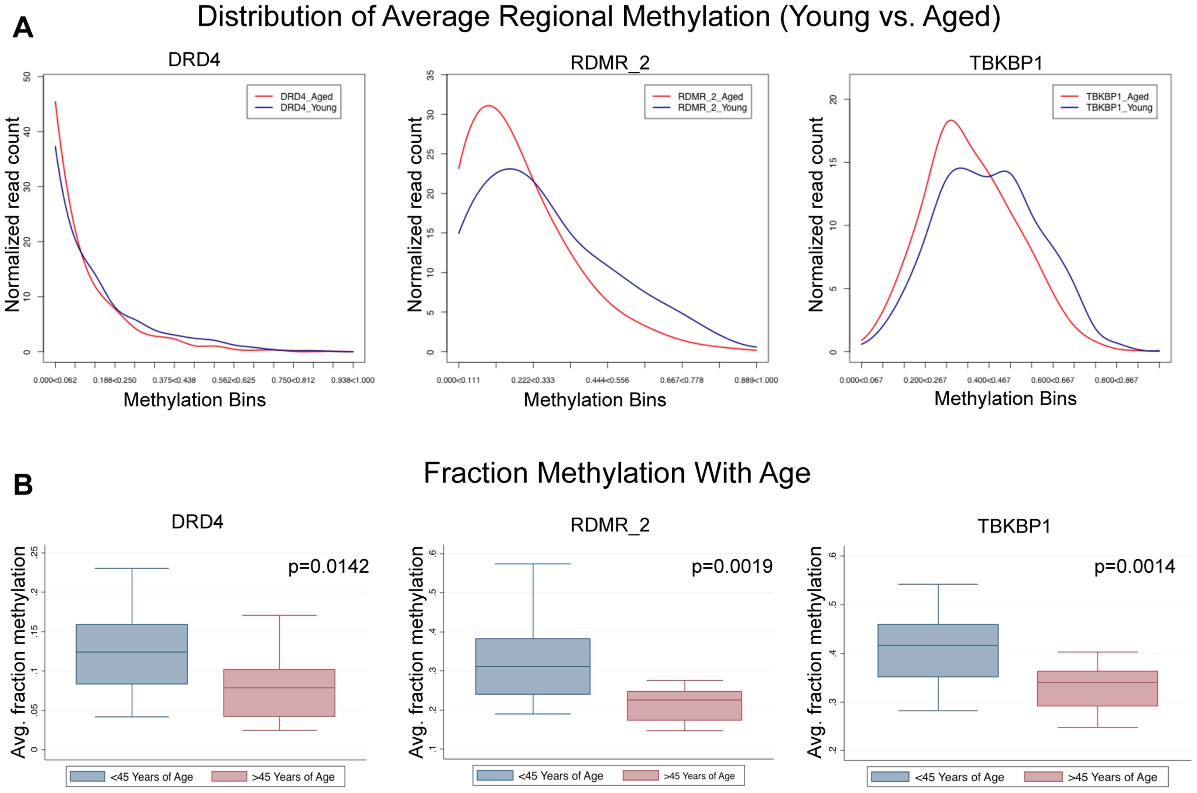 Single molecule analysis reveled 3 distinct alterations that occur with age.
