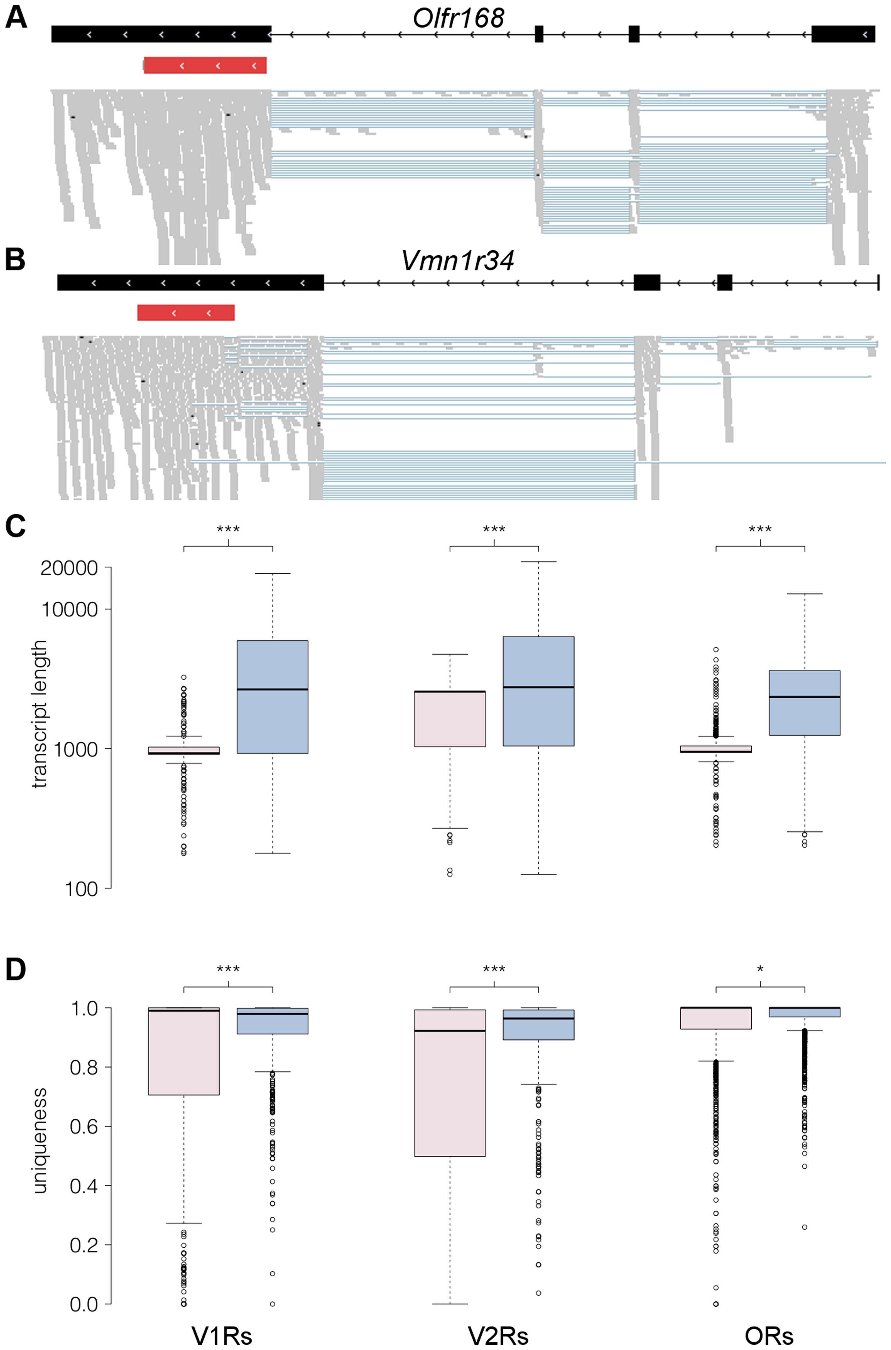 RNAseq provides comprehensive gene models for ORs and VRs.