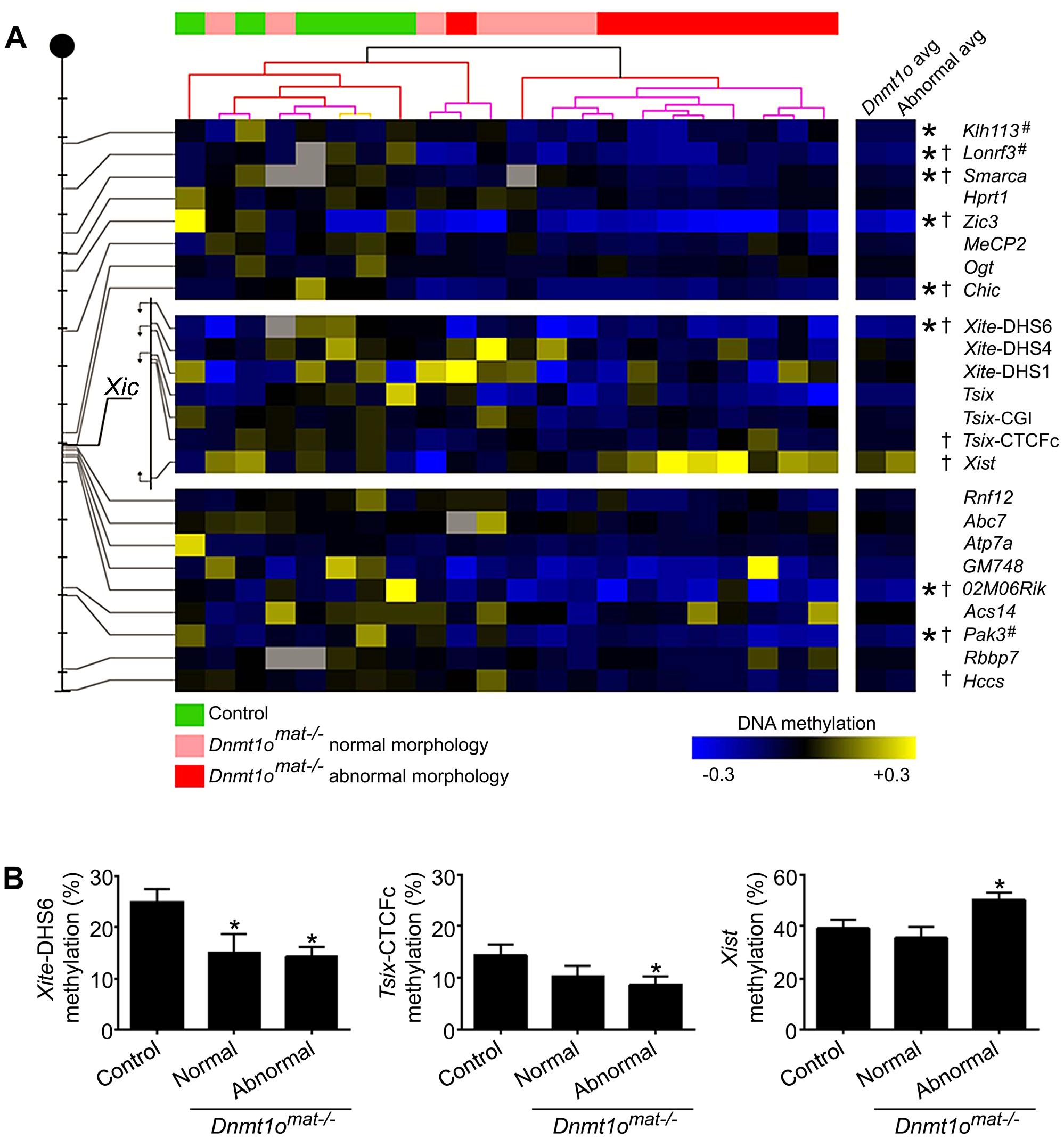 DNA methylation of X-CGI and <i>Xic</i> loci in <i>Dnmt1o<sup>mat−/−</sup></i> female placentae.