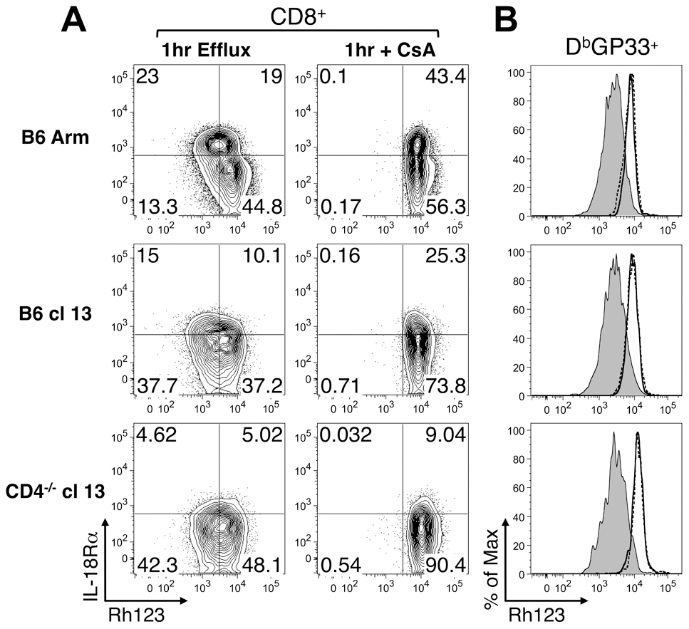 Rh123 efflux in memory and exhausted CD8 T cells.