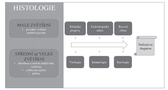 Souhrn vztahu histologického vyšetření a dalších diagnostických metod v diagnostickém algoritmu.