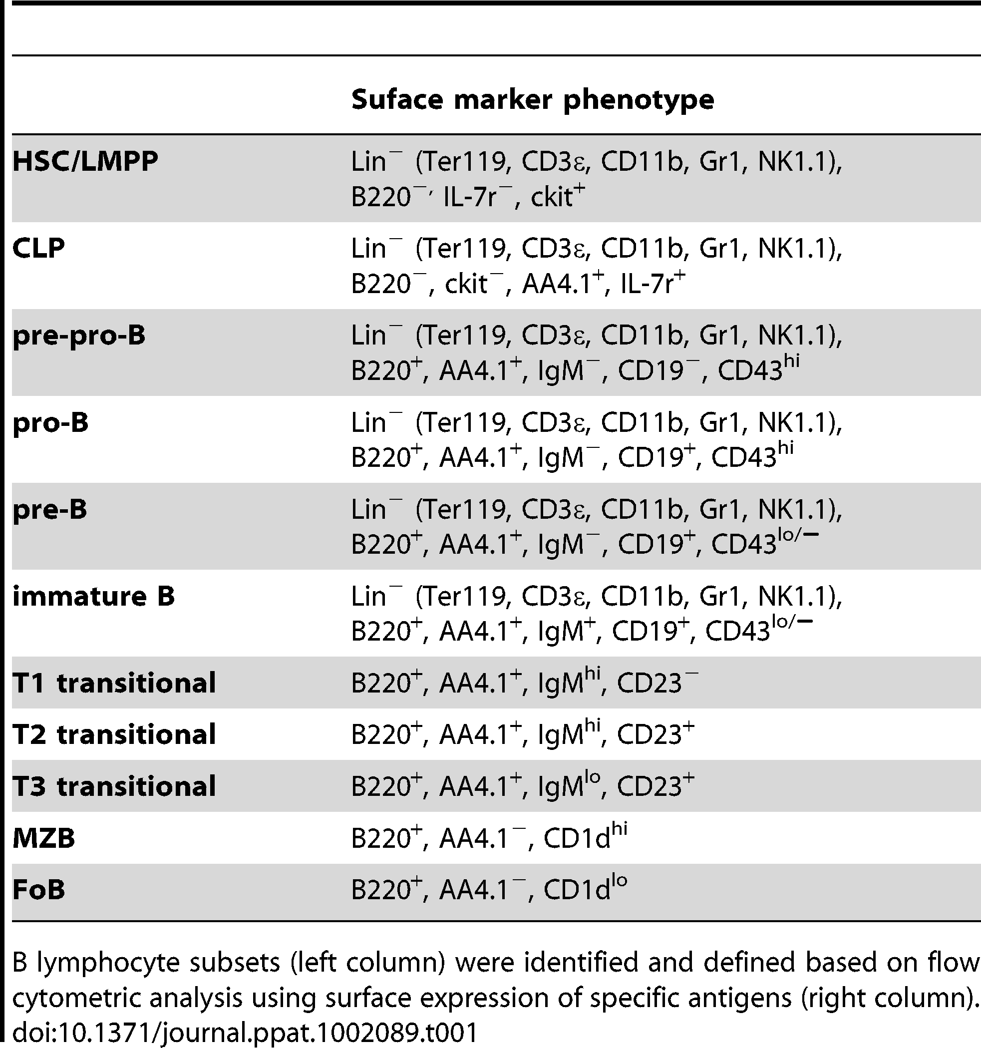 Differentiation antigen phenotypes of developing and mature B2 B cells.