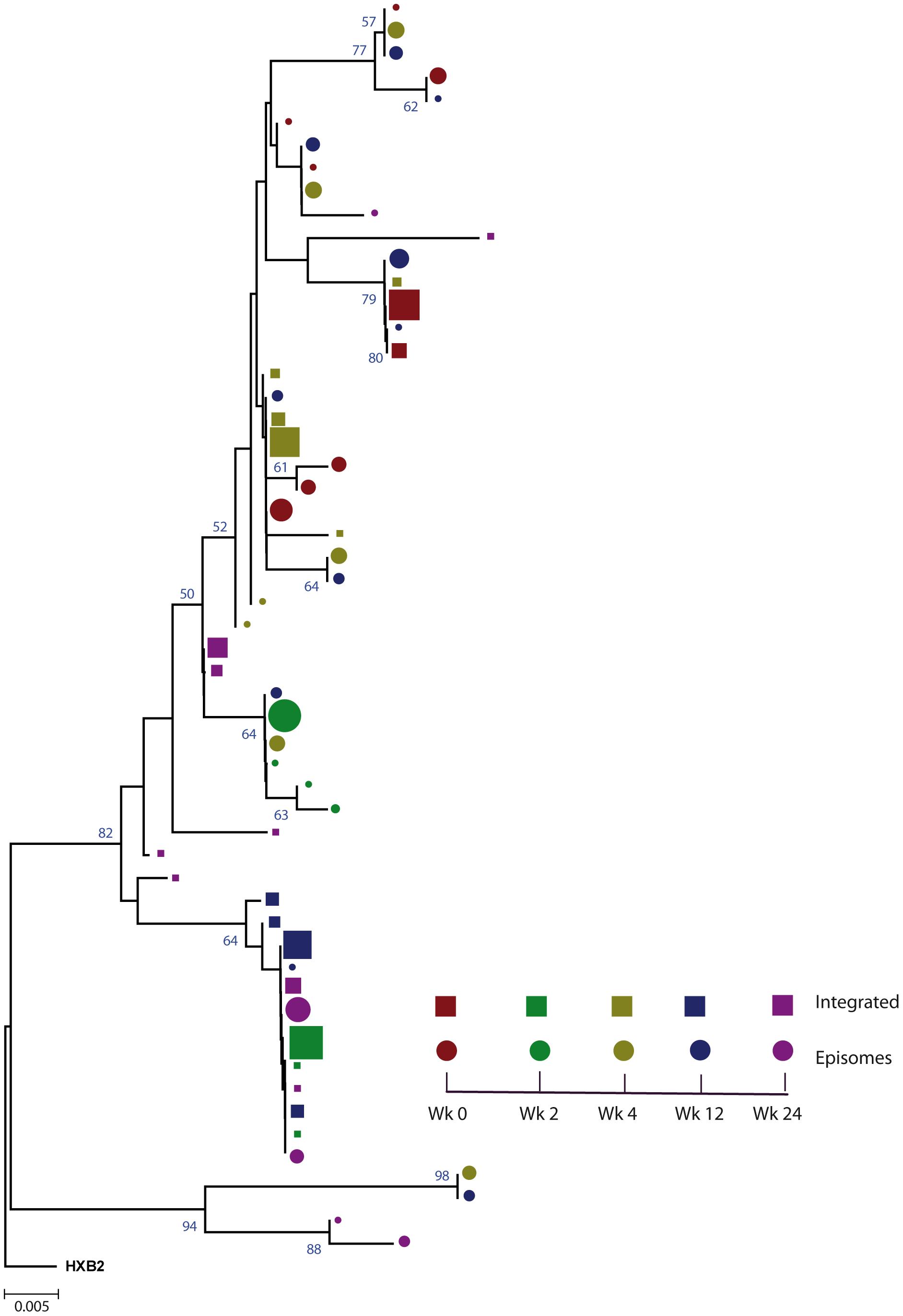 Phylogenetic tree of patient 1.