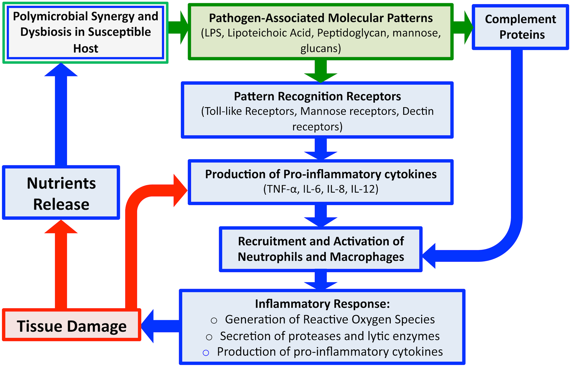 An overview schematic of the microbial and host-associated pathologies of periodontal disease.