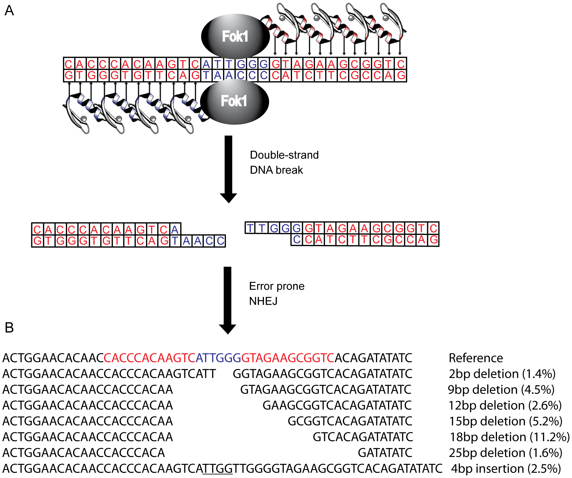 Zinc finger nucleases (ZFNs) bind, cleave, and disrupt <i>cxcr4</i>.