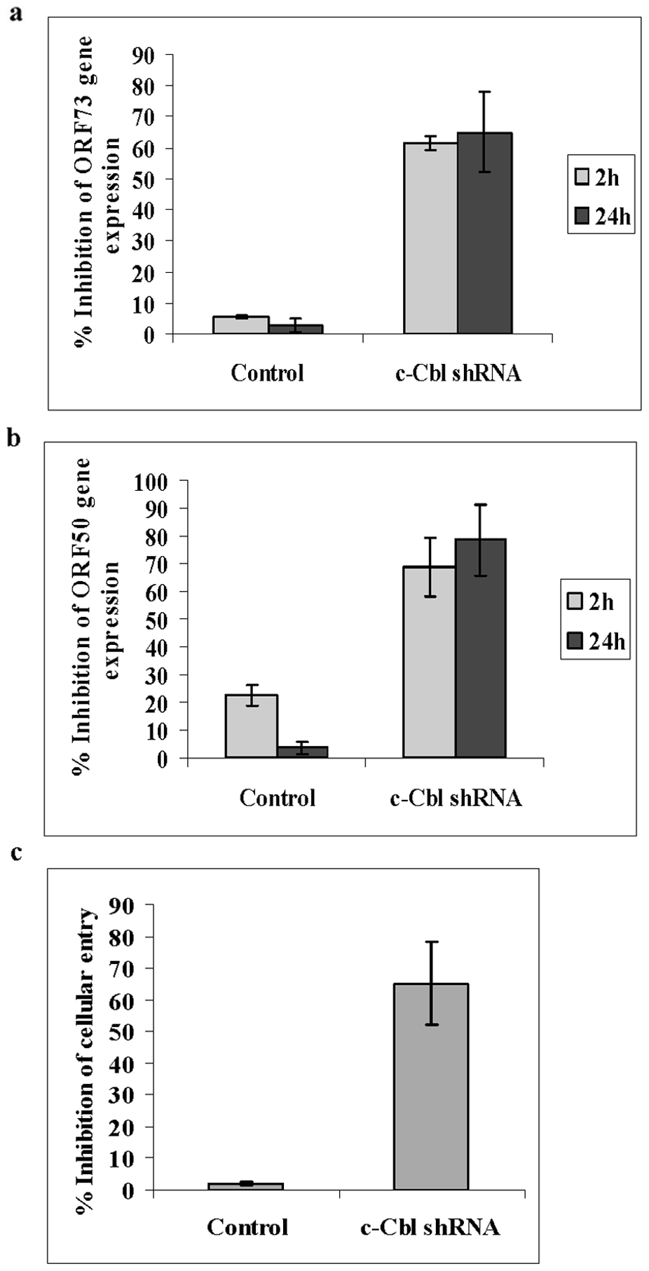 c-Cbl shRNA inhibits KSHV entry and infection.