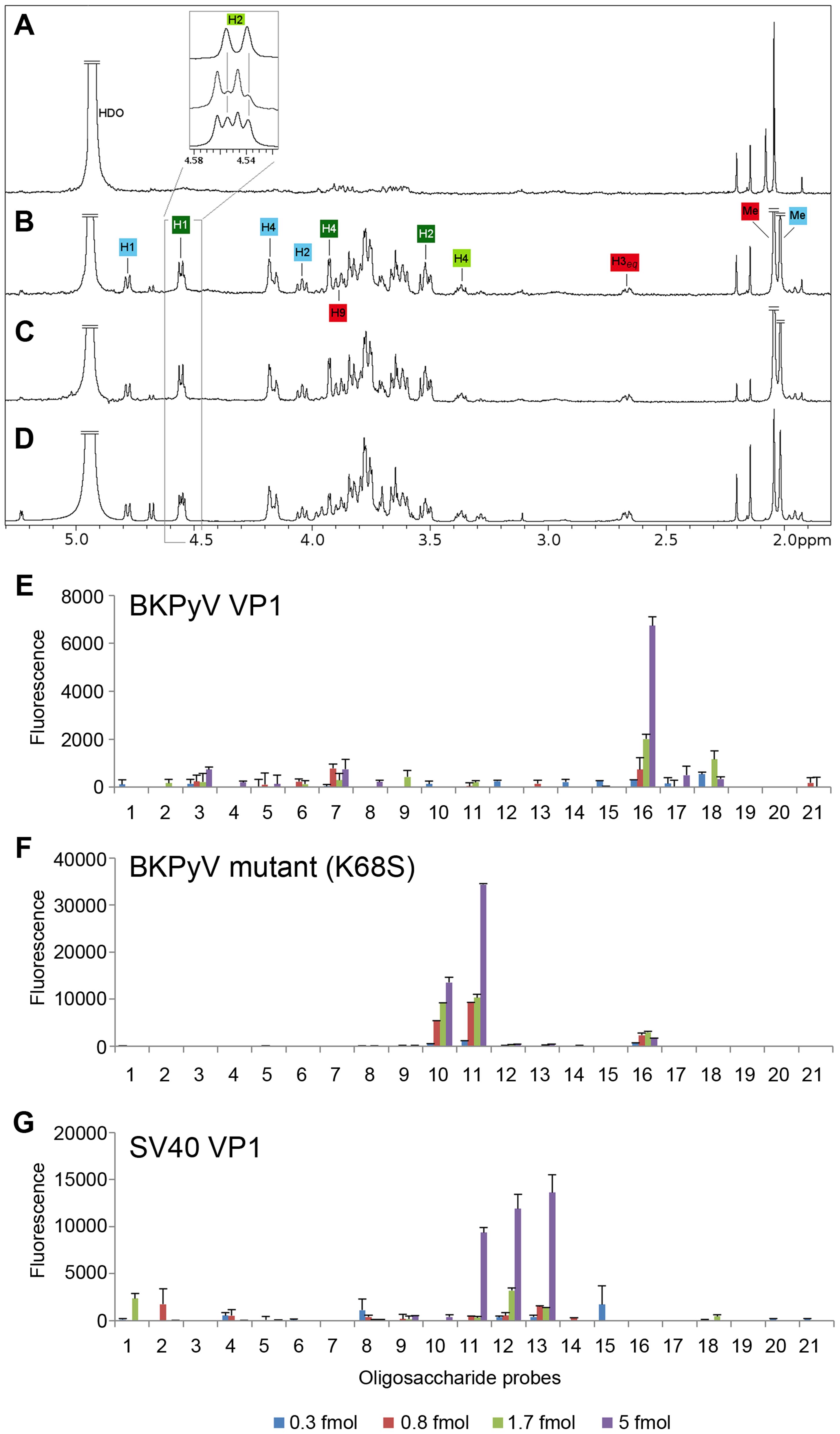 The K68S mutation targets BKPyV to the SV40 receptor GM1.