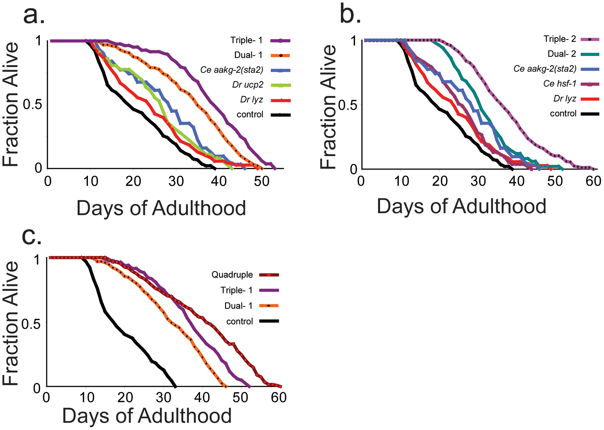 Lifespan curves of double-, triple-, and quadruple-expressing transgenic worms.