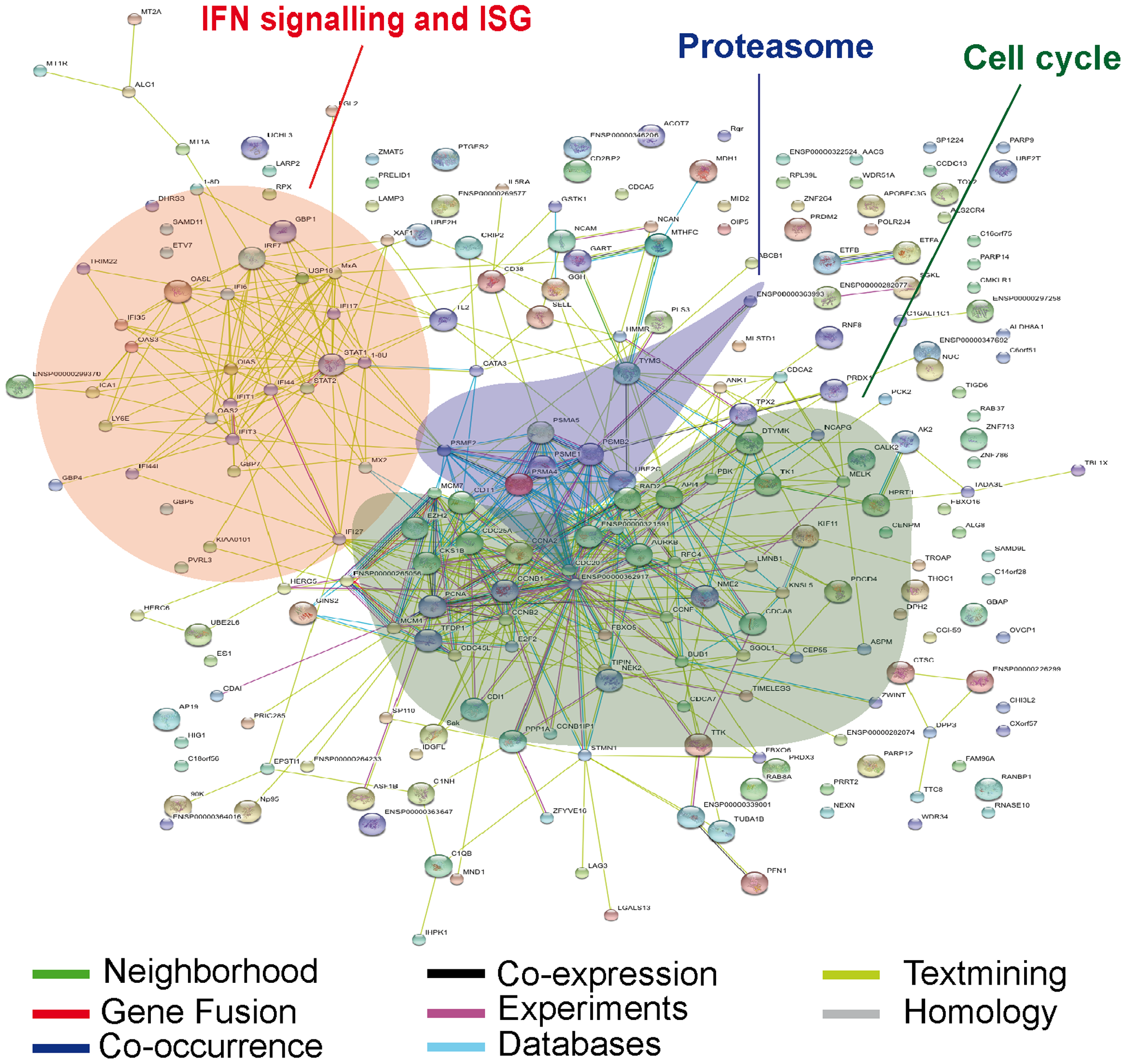 Predicted interaction networks of genes differentially expressed during HIV-1 infection.