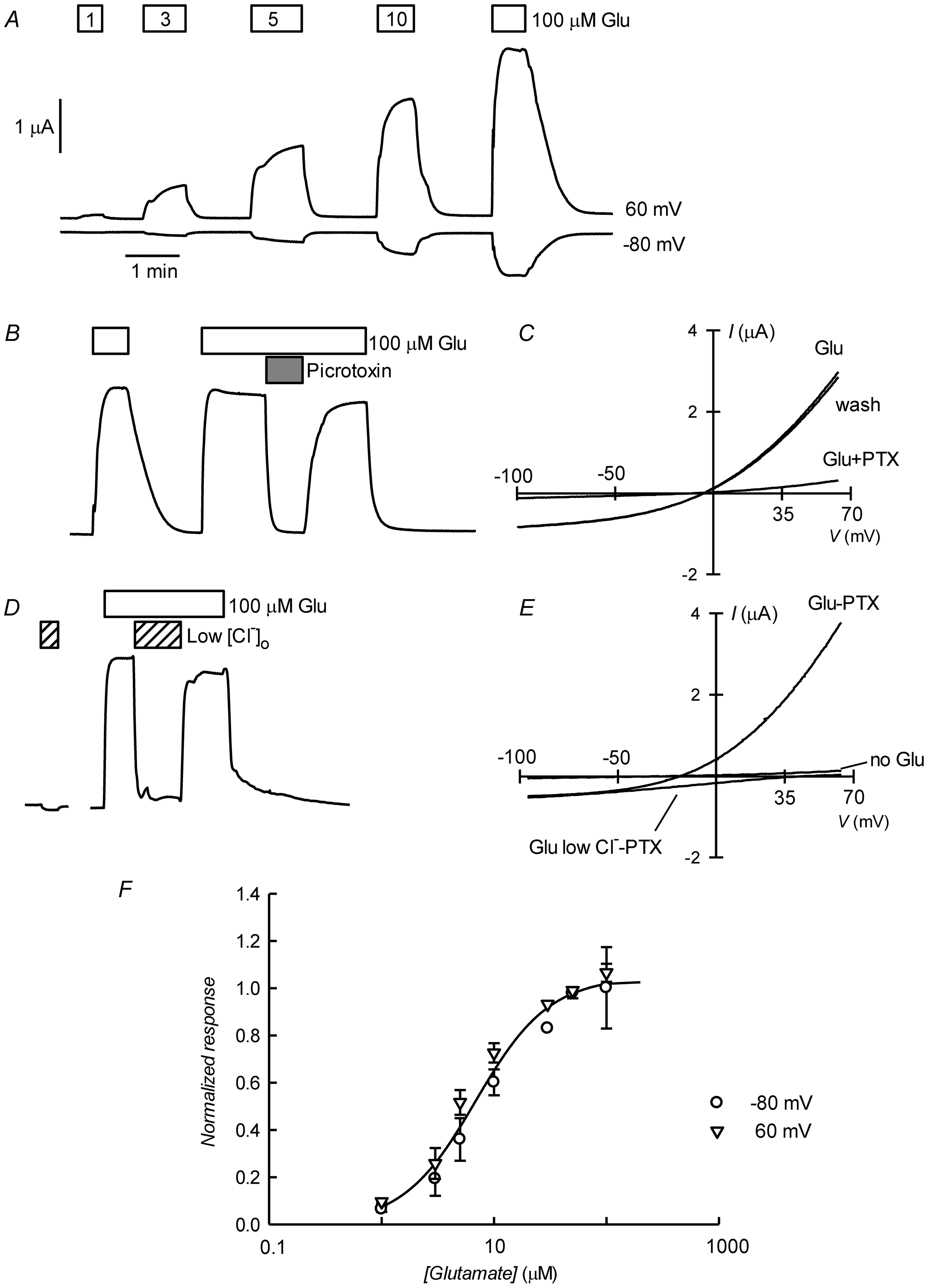 Glutamate-activated picrotoxin-sensitive currents of CrGluClα RNA-injected <i>Xenopus</i> oocytes.