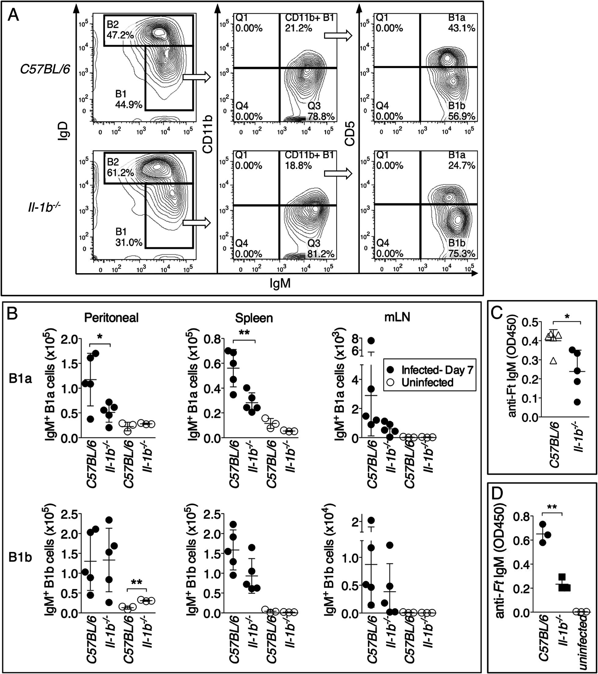 Reduced number of B1a B cells in <i>Il-1b</i><sup>-/-</sup> mice infected with <i>Ft</i> LVS.