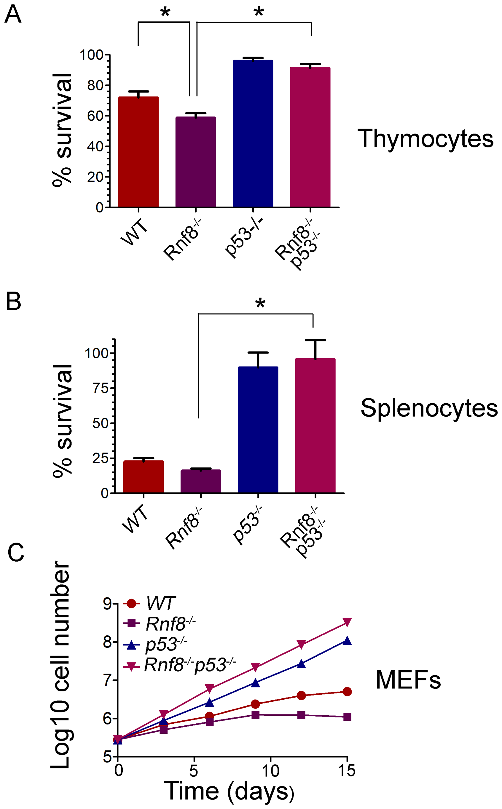 Radioresistance and increased proliferation of <i>Rnf8<sup>−/−</sup></i> cells in the absence of p53.