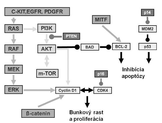 Vybrané cesty v patogenéze melanómu. Popis v texte.