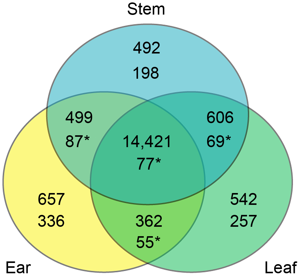 Overlap of genes assessed in the three tissues overall and in the CCT-AB gene list.