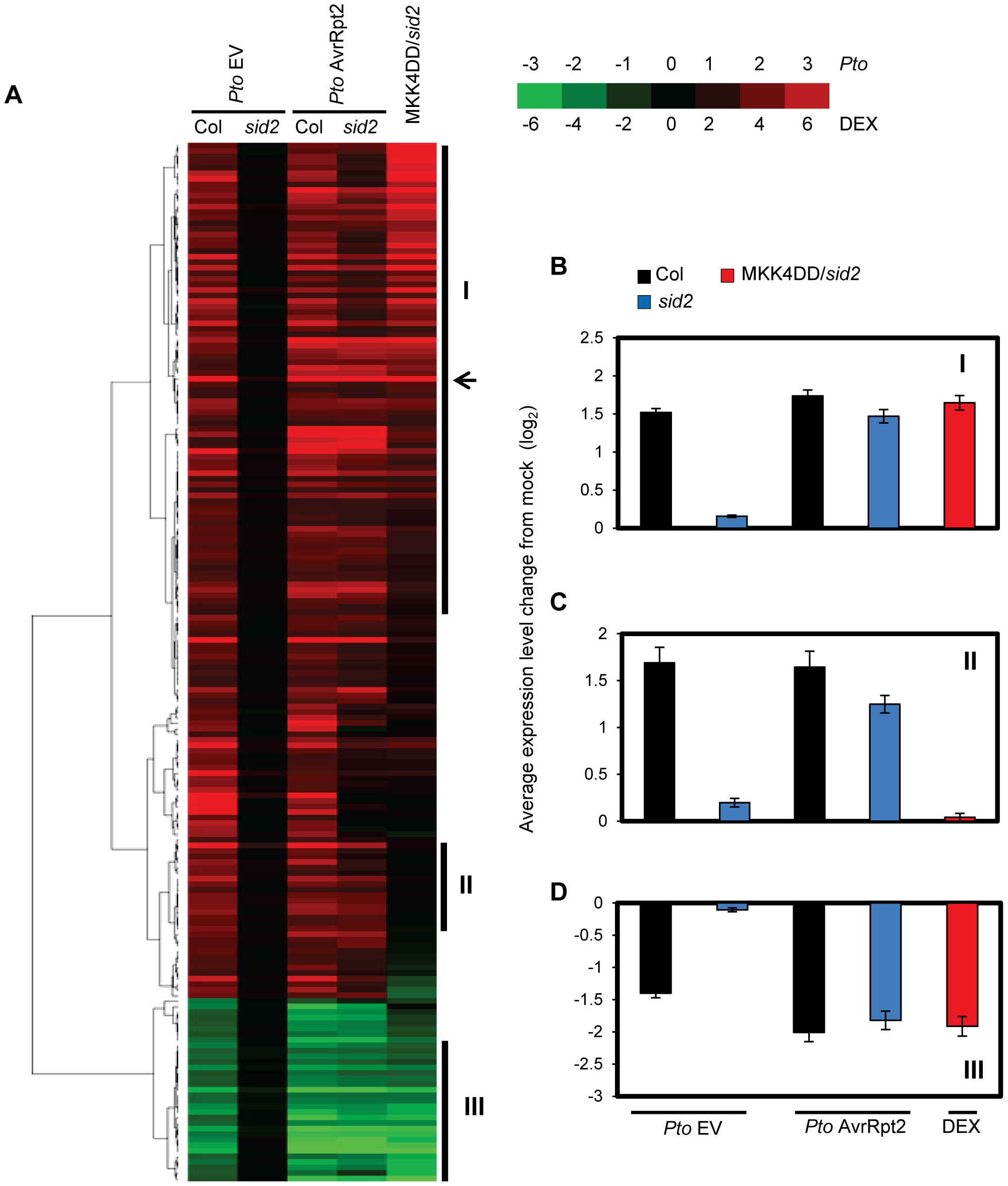 Sustained MAPK activation supports transcriptional regulation of a majority of SA-responsive genes without SA.