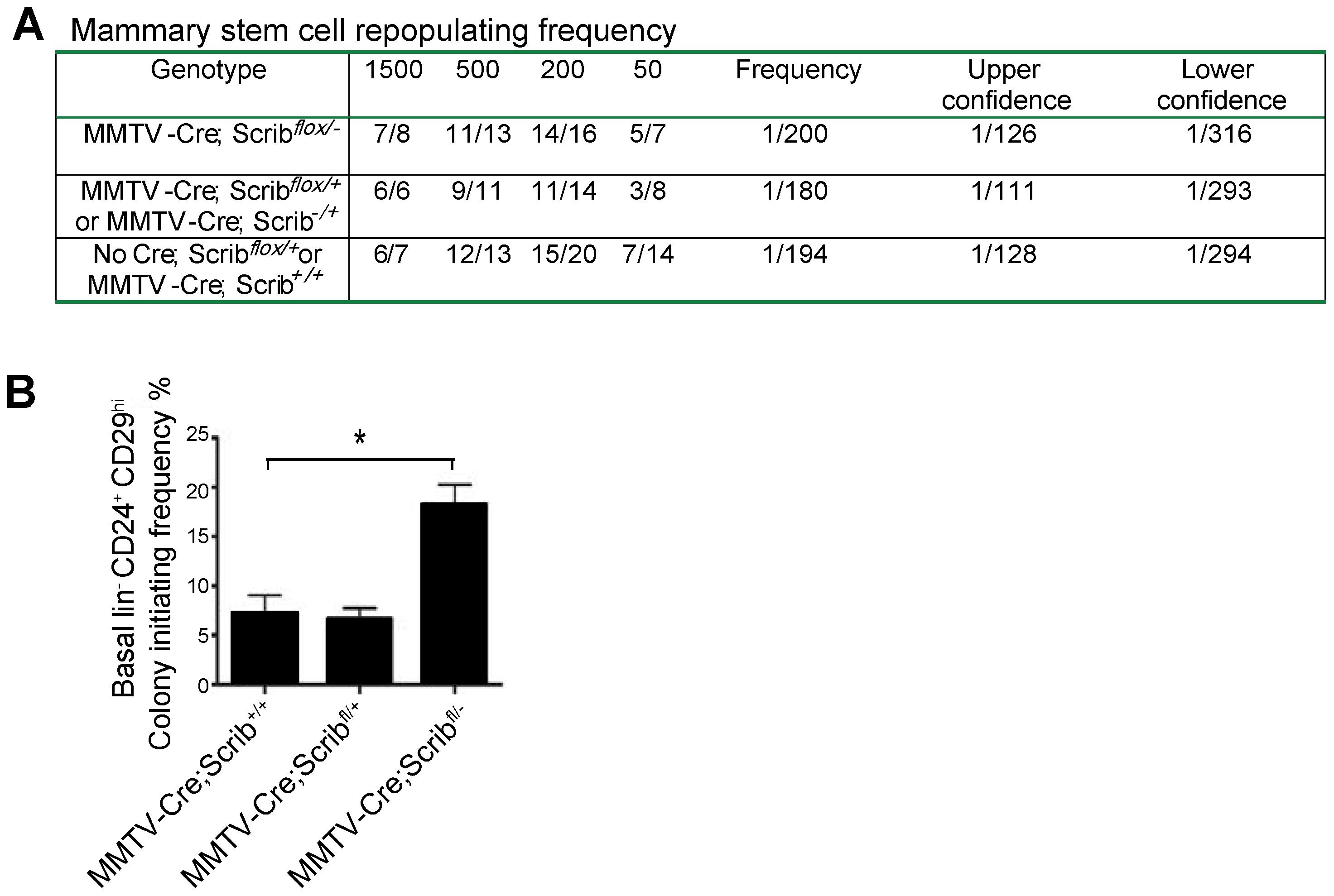 <i>Scrib</i> loss impacts on basal progenitors activity but not mammary stem cell turnover <i>in vivo</i>.