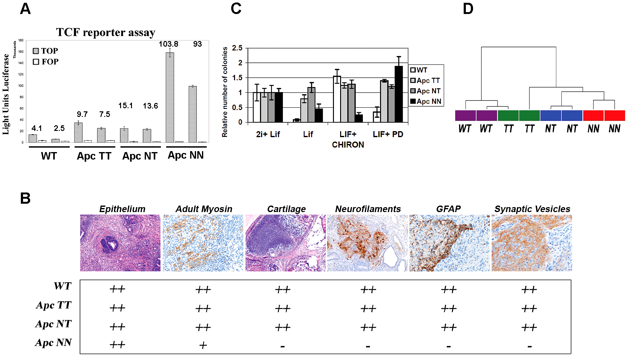 Wnt signaling regulates the differentiation potential of mouse ESCs in a dosage-dependent manner.