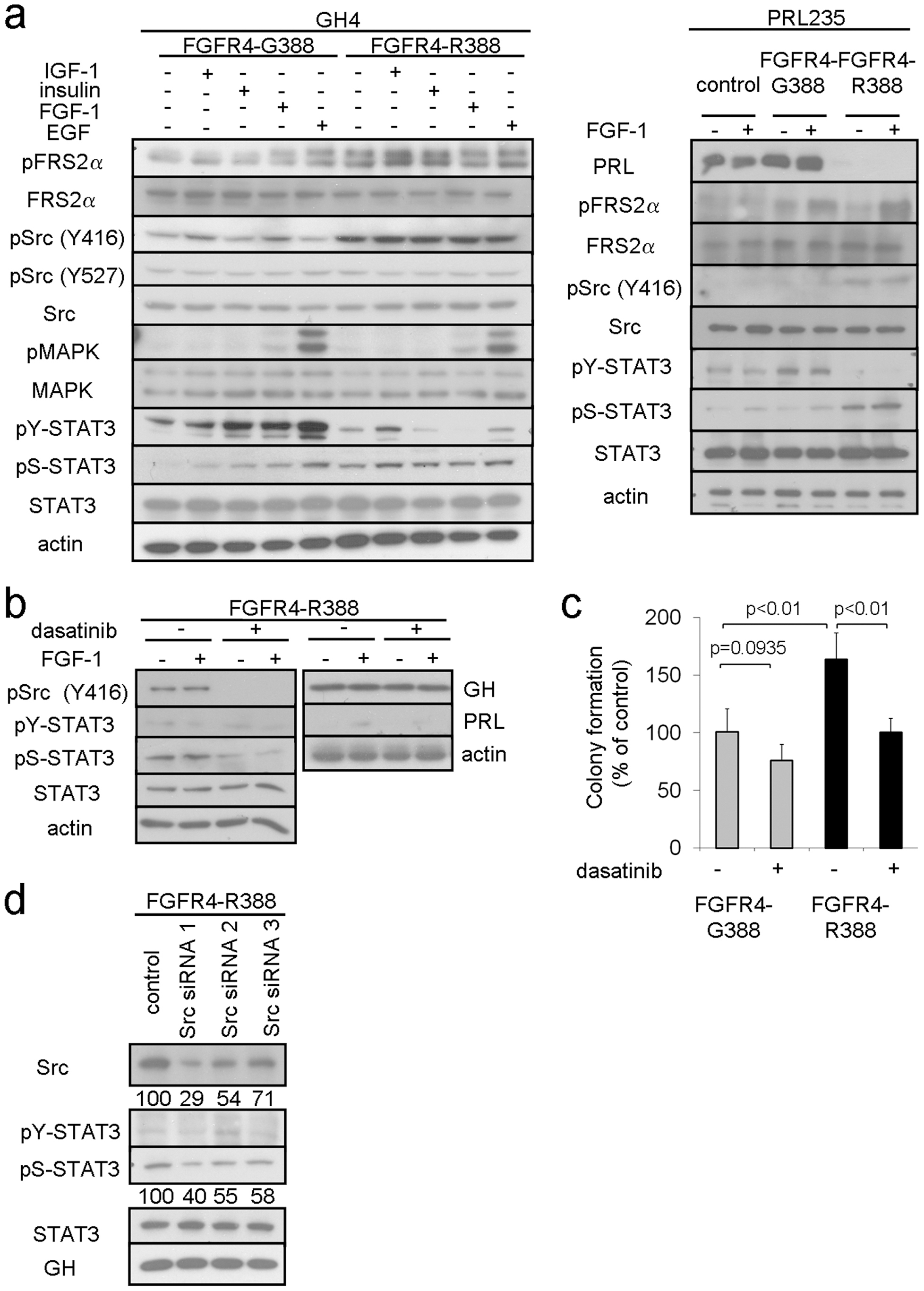 FGFR4-R388 promotes Src and STAT3 signaling in pituitary tumor cells.