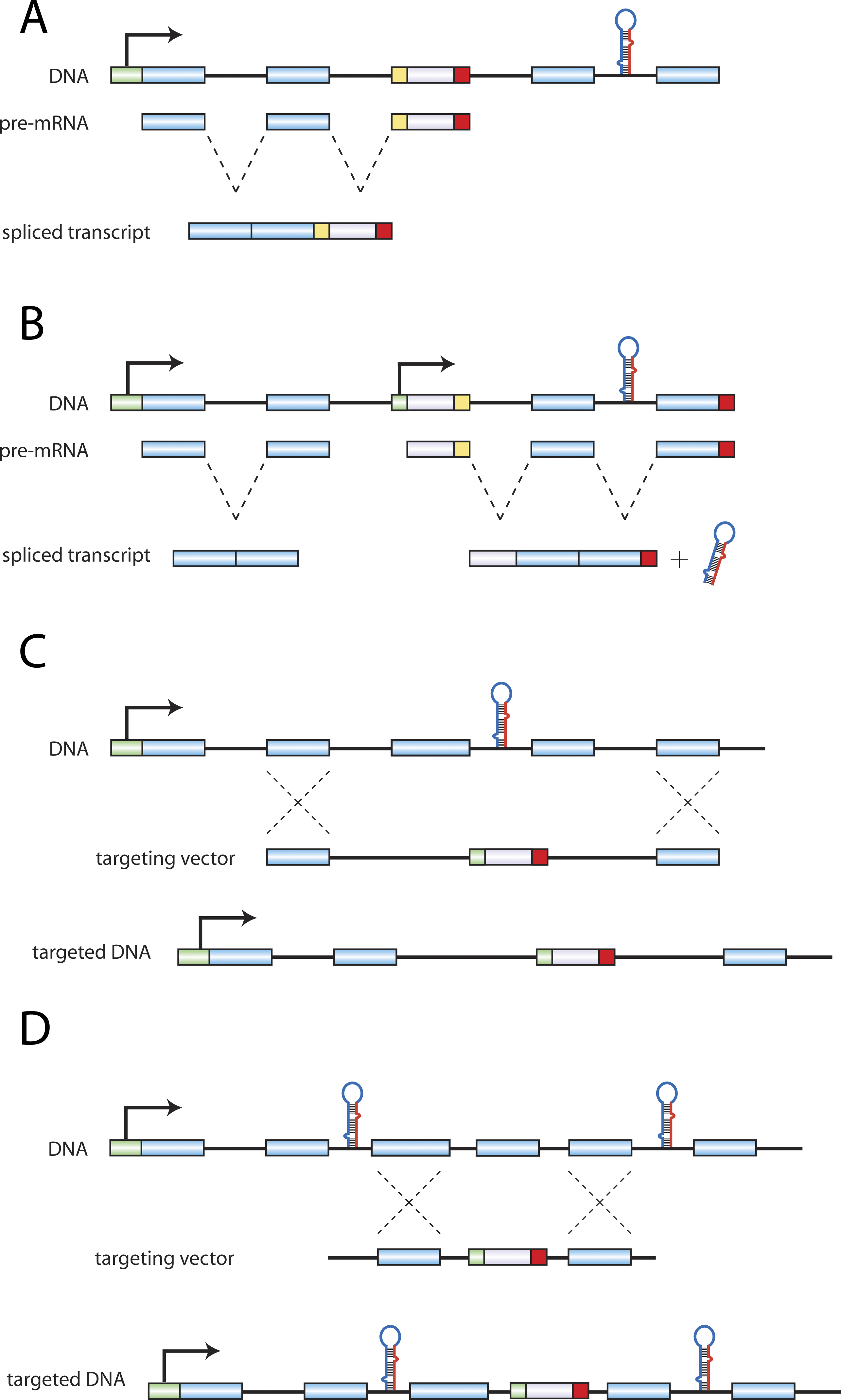 Configurations of Protein:miRNA Gene Disruptions.