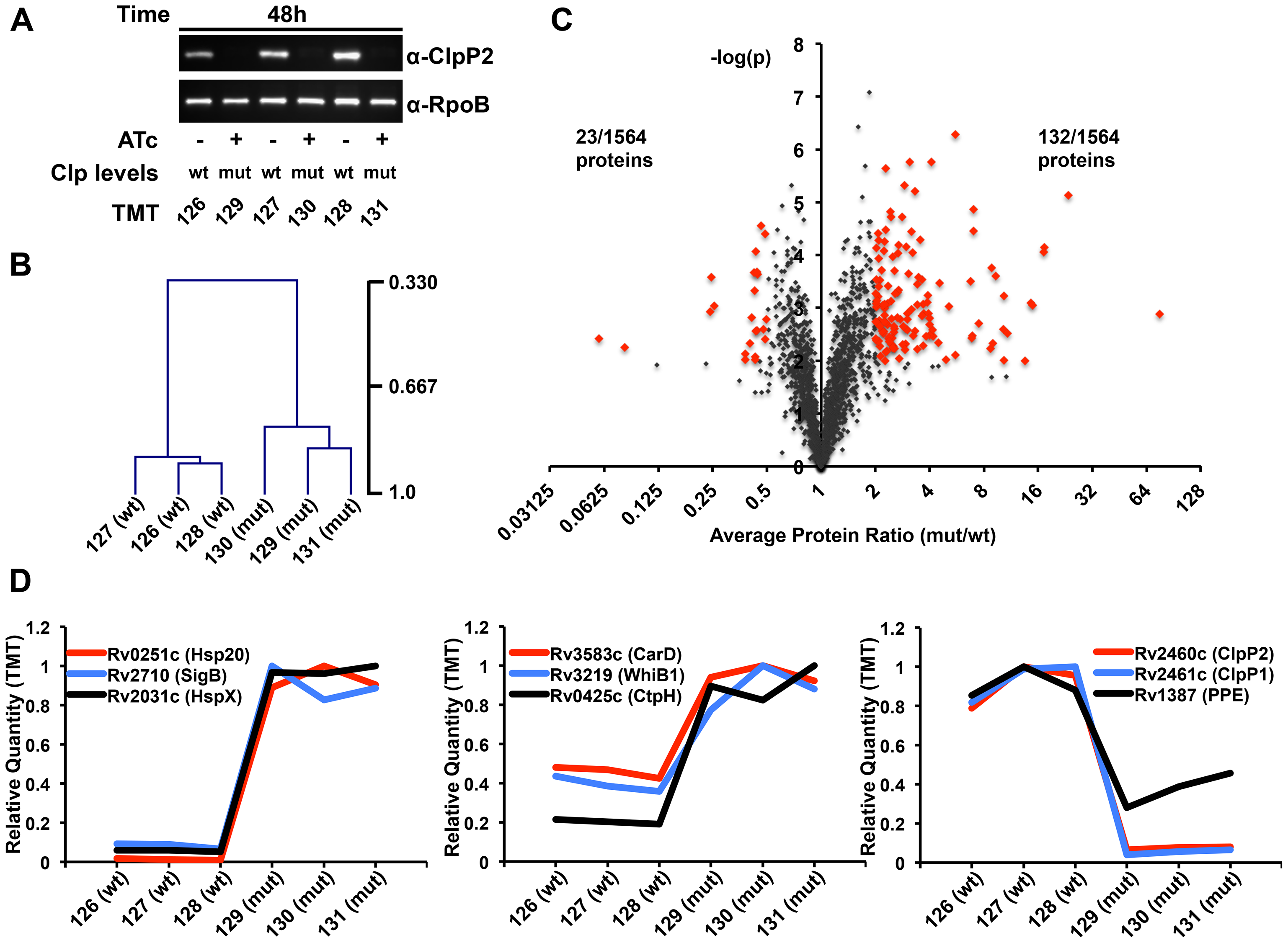 Proteomic profiling of P750-clpP1P2DAS in the presence and absence of ATc reveals a wide array of potential Clp protease substrates.