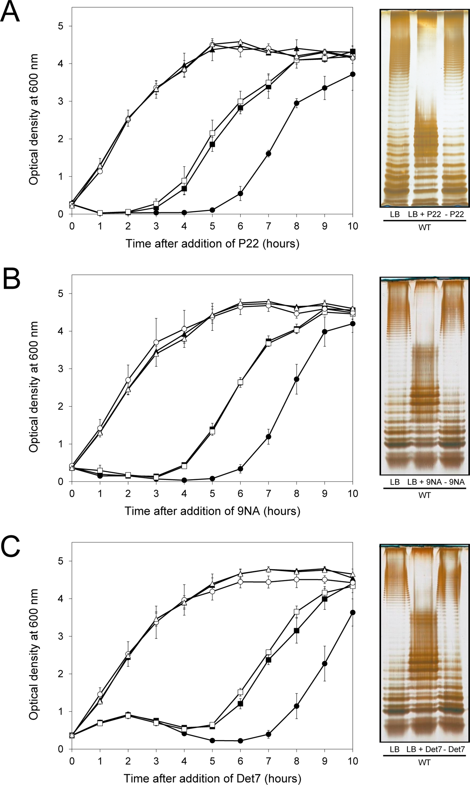Reversibility of the phage-resistant phenotype in the wild type strain.