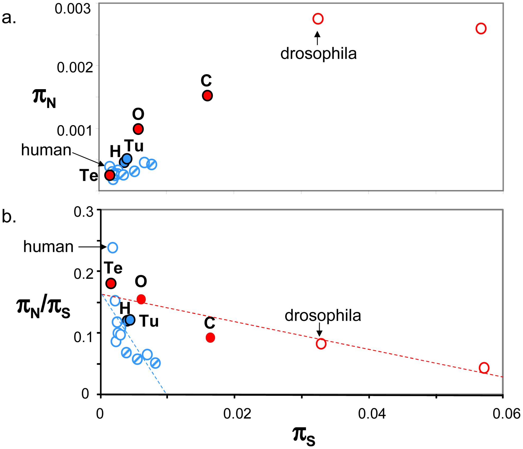 Published estimates of genome-wide π<sub>S</sub>, π<sub>N</sub> and π<sub>N</sub>/π<sub>S</sub> in animals.