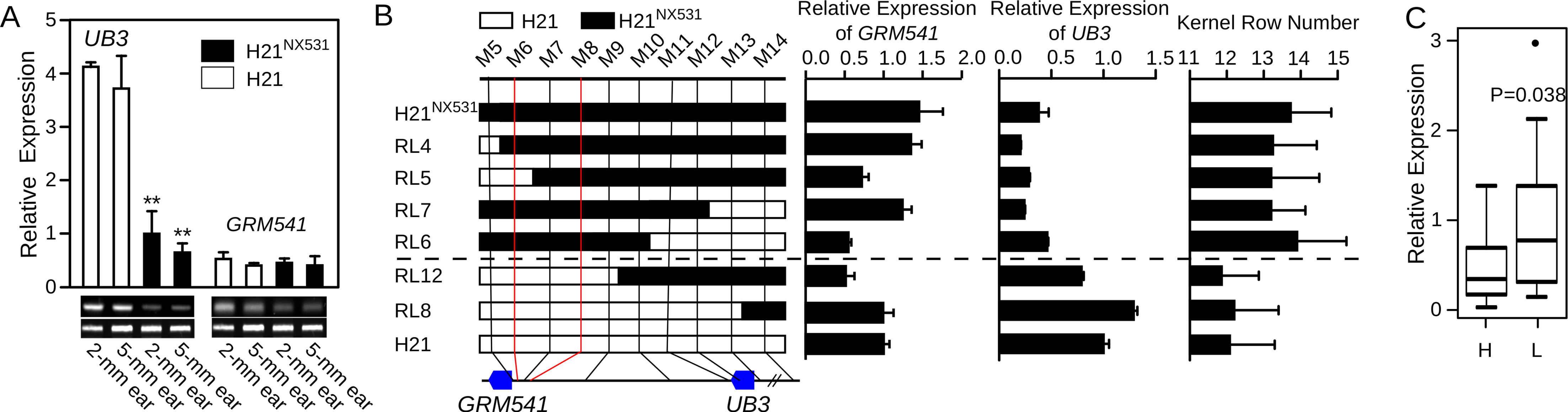 Analysis of <i>UB3</i> and GRMZM2G001541 expression.