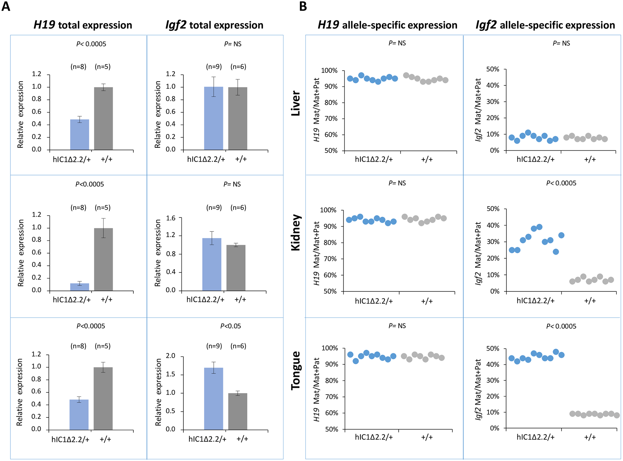 Analysis of <i>H19</i> and <i>Igf2</i> expression in <i>H19</i><sup><i>hIC1</i>Δ<i>2</i>.<i>2/+</i></sup> newborn mice.