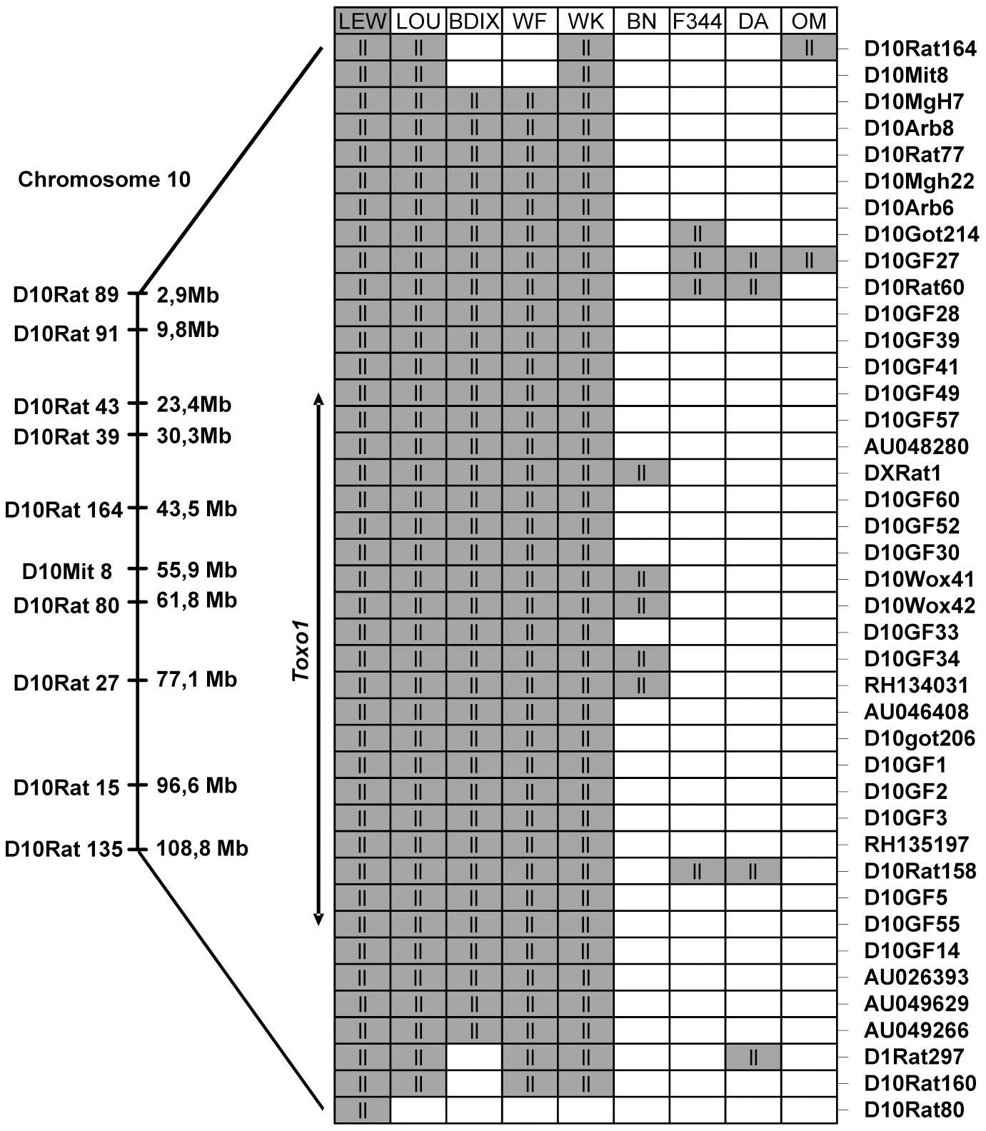 Haplotype analysis of the resistance locus to <i>T. gondii</i> infection, on chromosome 10.