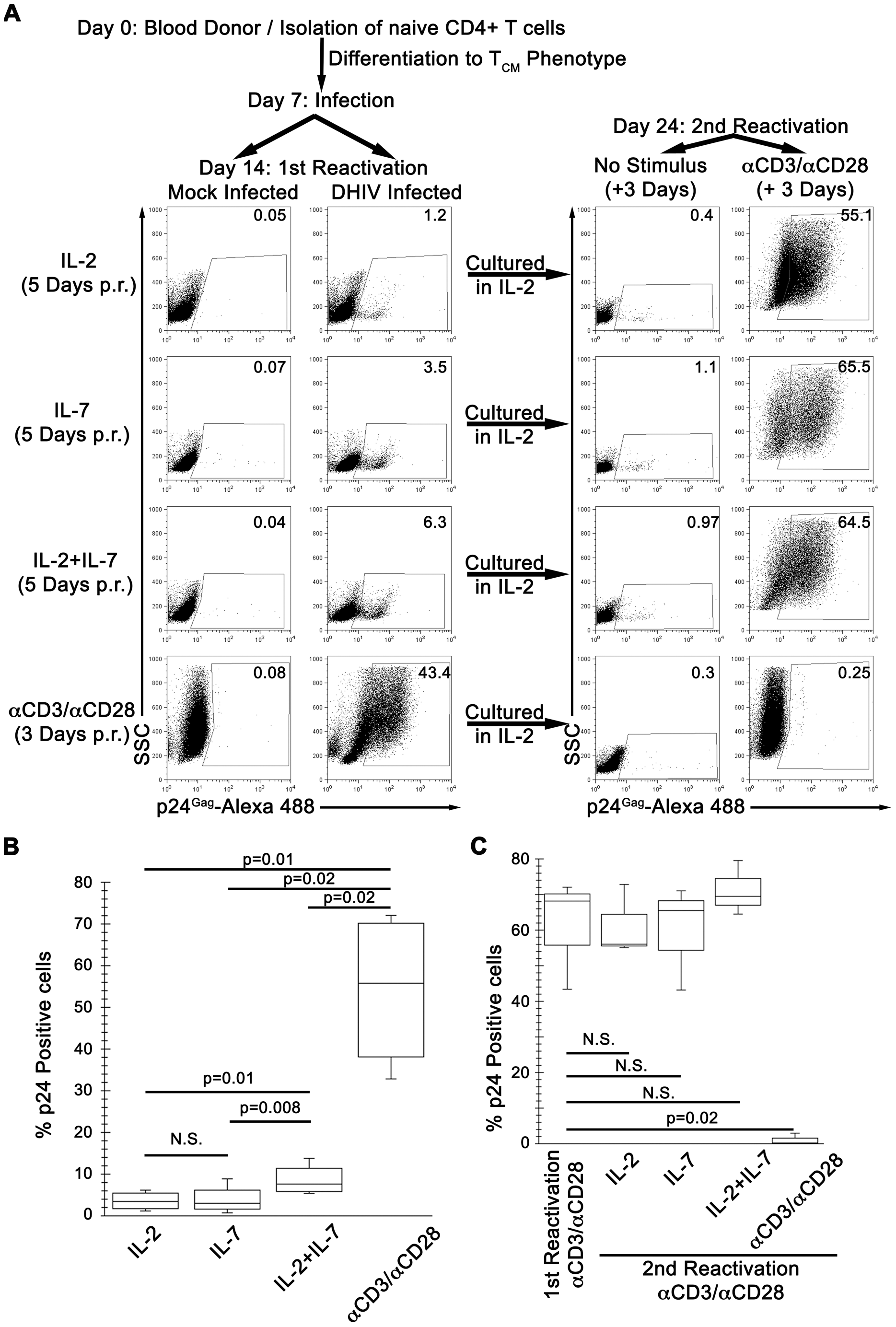 IL-7 induces partial reactivation of latent HIV-1 in cultured T<sub>CM</sub>.