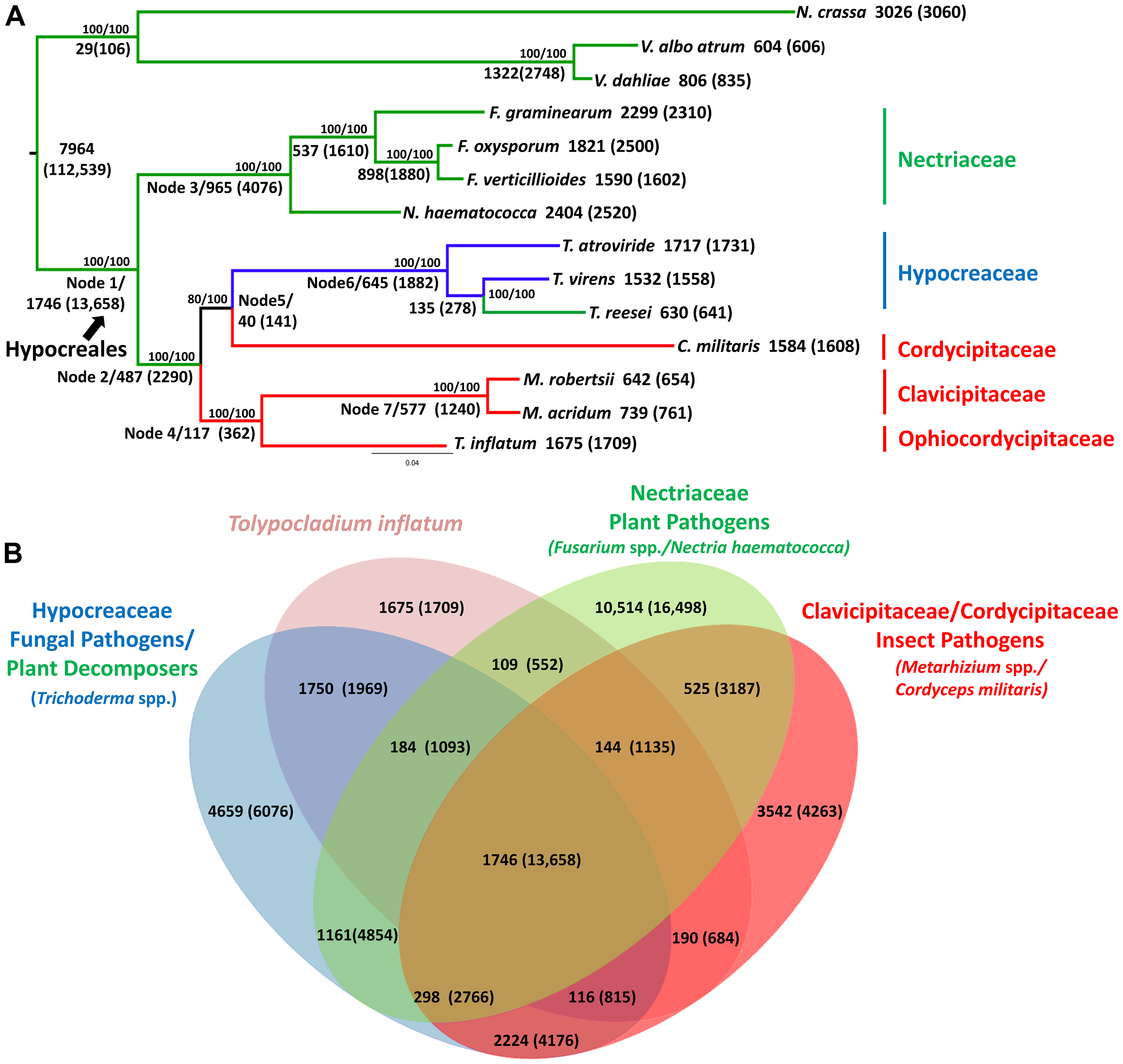 Phylogenetic relationships and orthologous gene clusters.