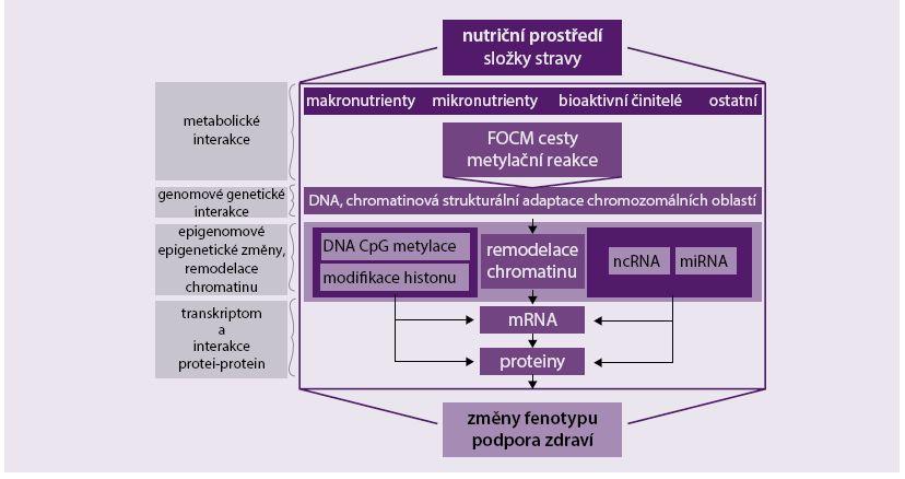 Schéma 1. Přehled epigenetických mechanizmů - vliv nutričních faktorů na změny fenotypu