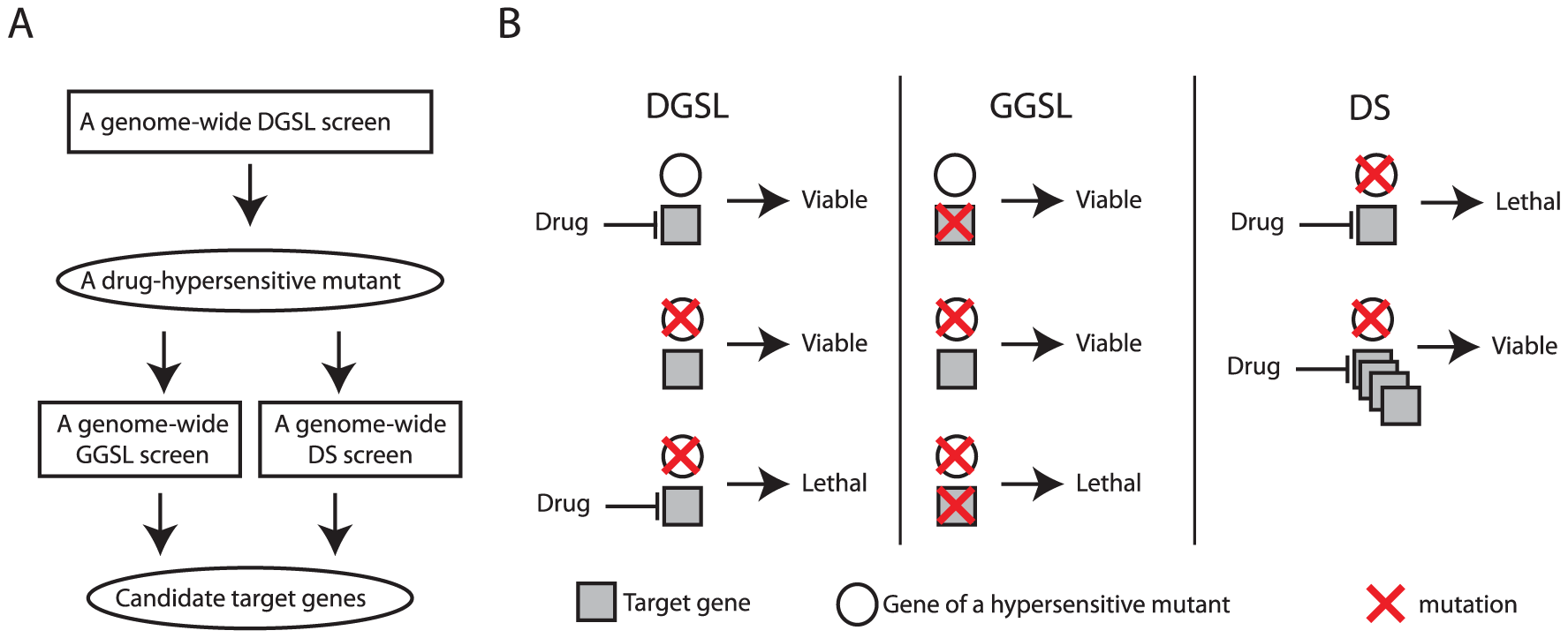 A diagram and concept of discovering drug target using the SL/DS strategy.