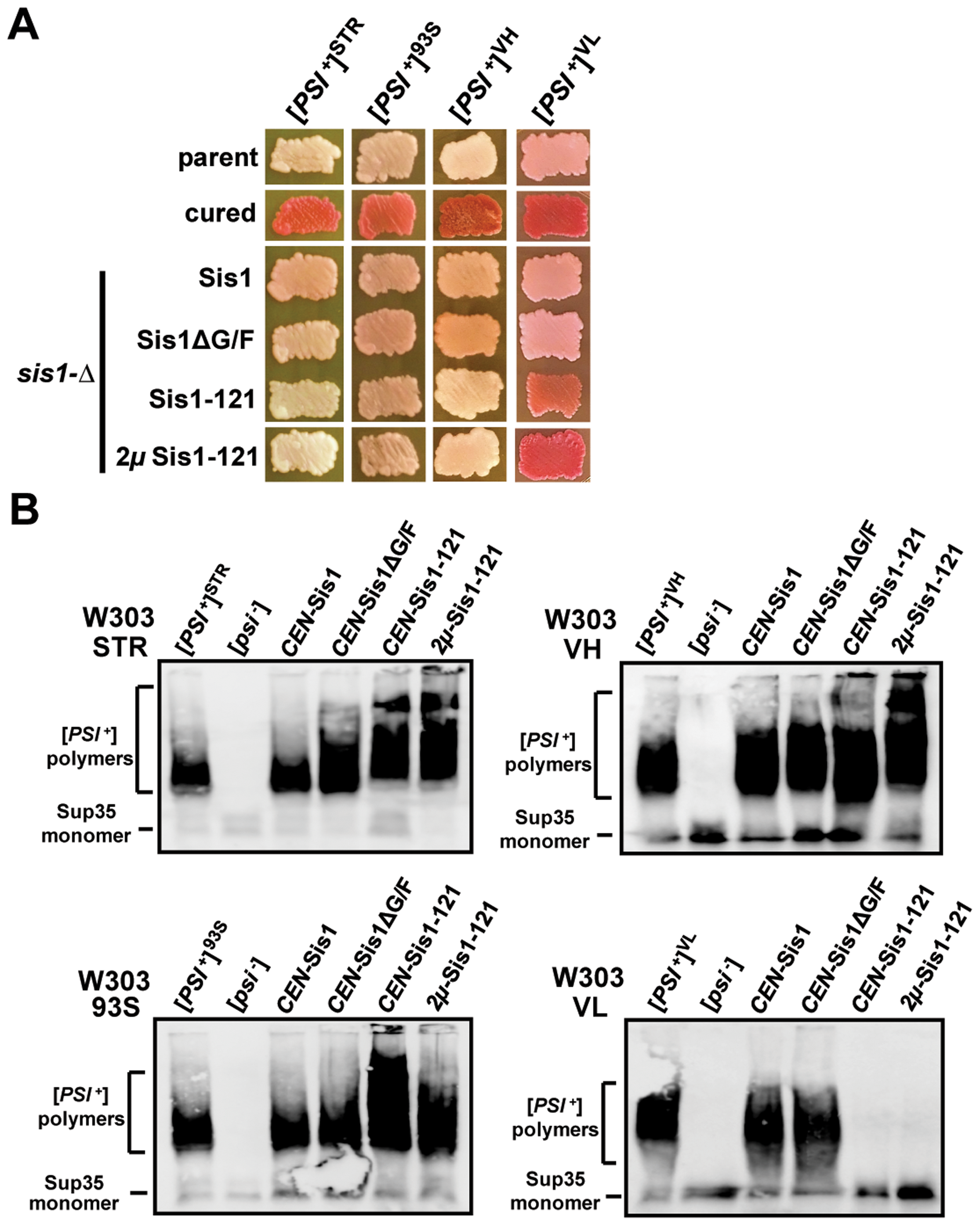 [<i>PSI</i><sup>+</sup>] requirements for Sis1 are strongly dependent upon overall variant strength.