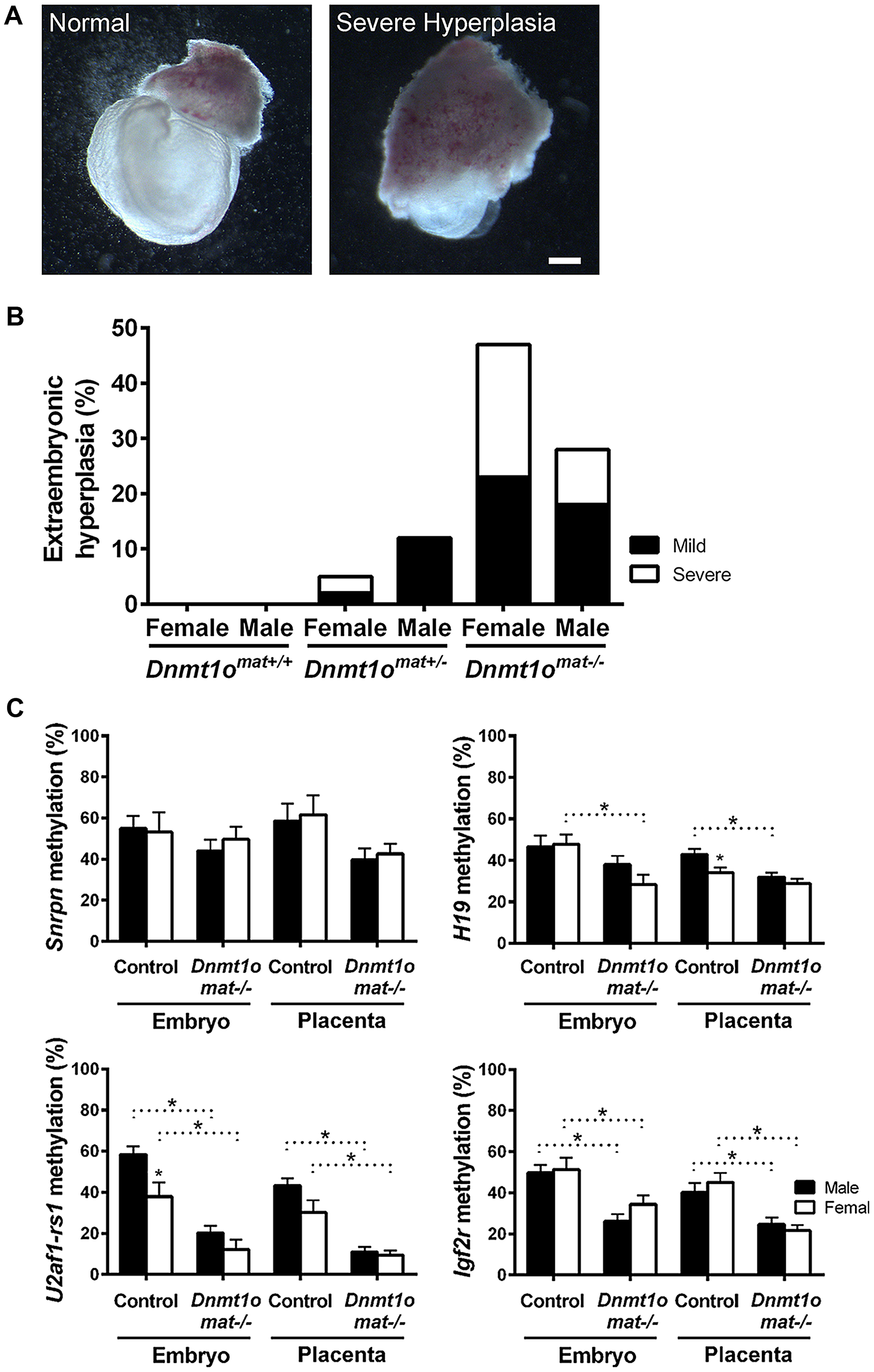 Morphological phenotypes in 9.5dpc extraembryonic tissues associated with DNMT1o deficiency of <i>Dnmt1o<sup>mat−/−</sup></i> offspring.