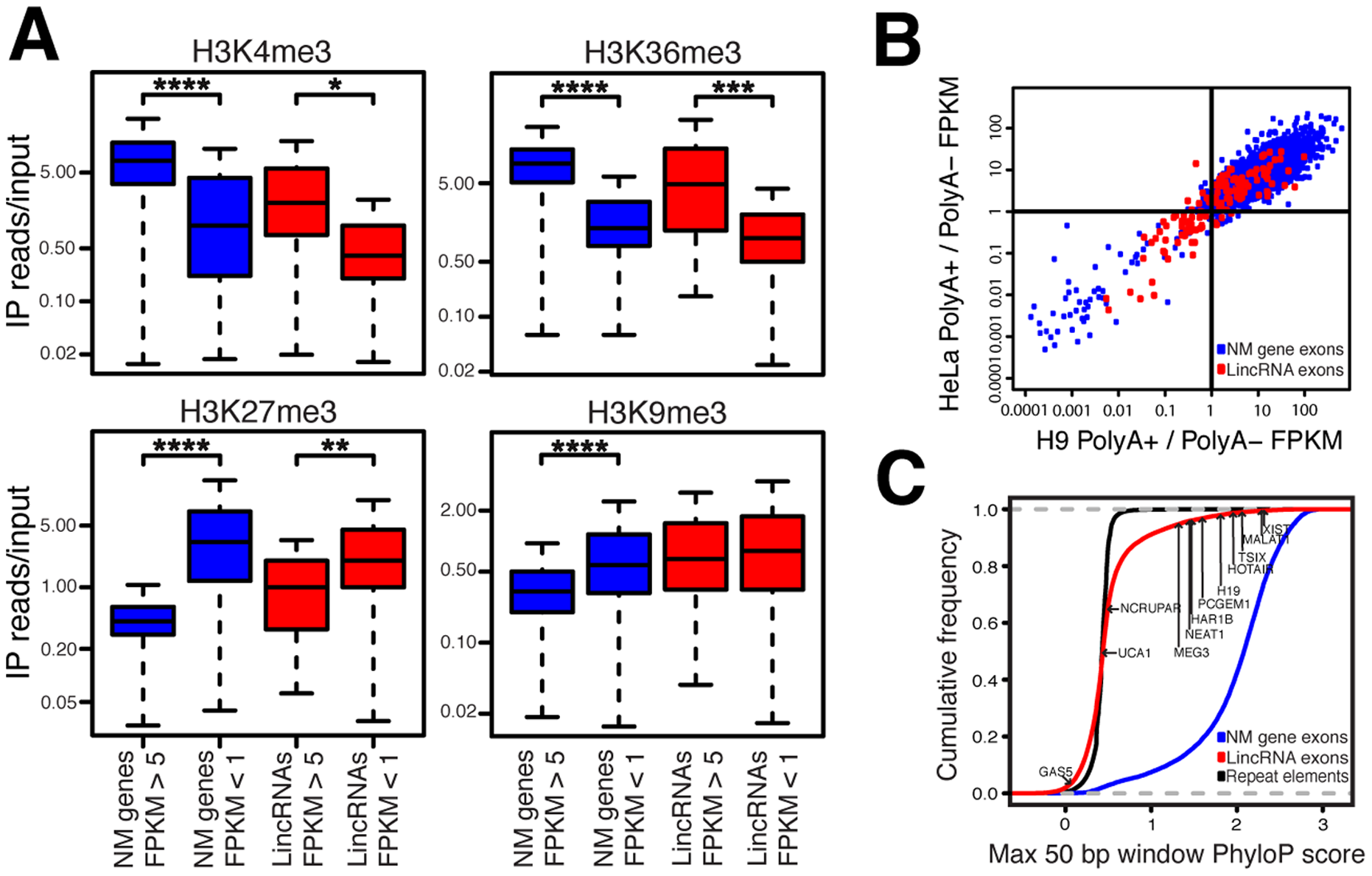 LincRNAs possess features inconsistent with transcriptional noise.