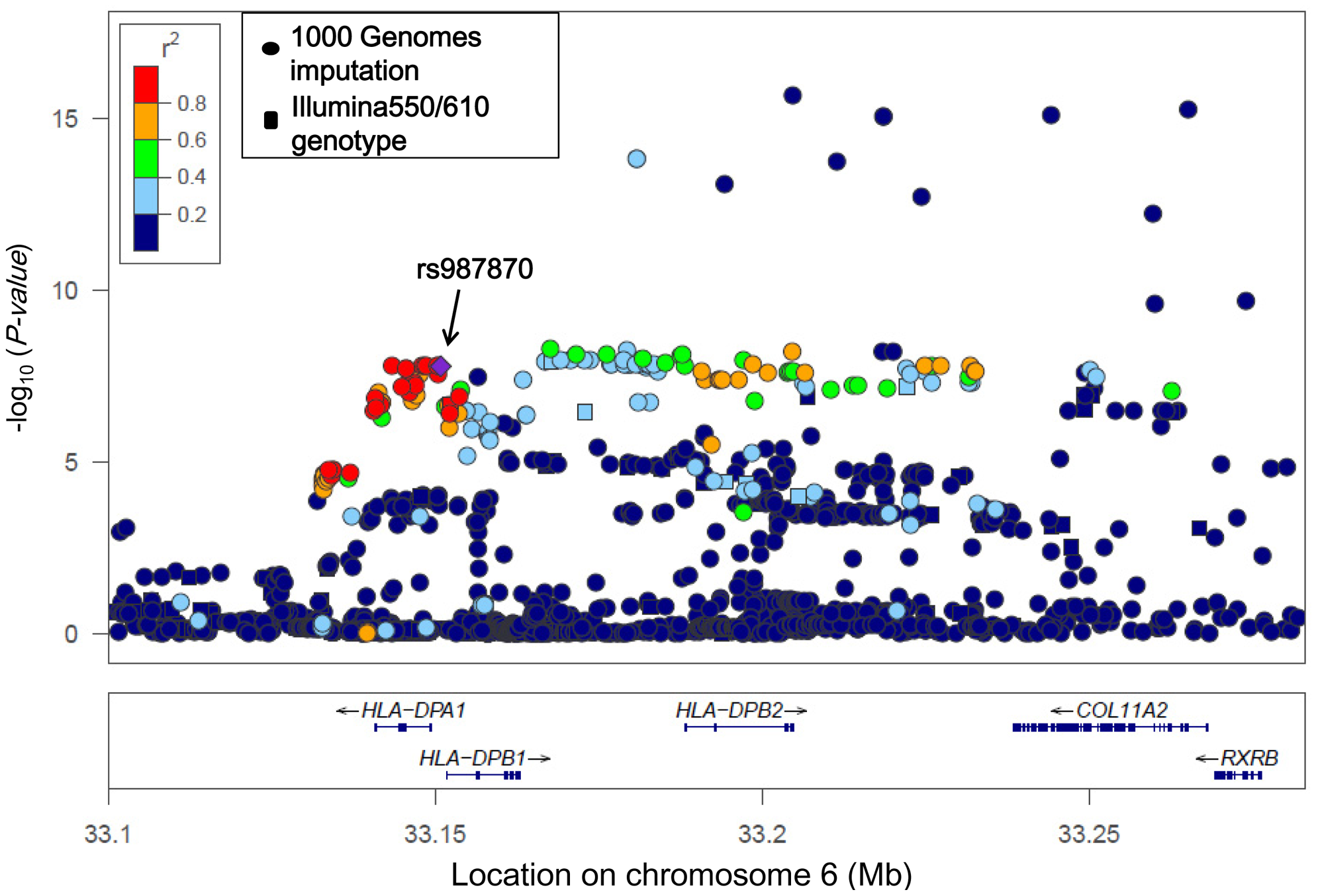 Association findings of genotyped (squares) and imputed (circles) SNPs in the <i>HLA-DP</i> region.