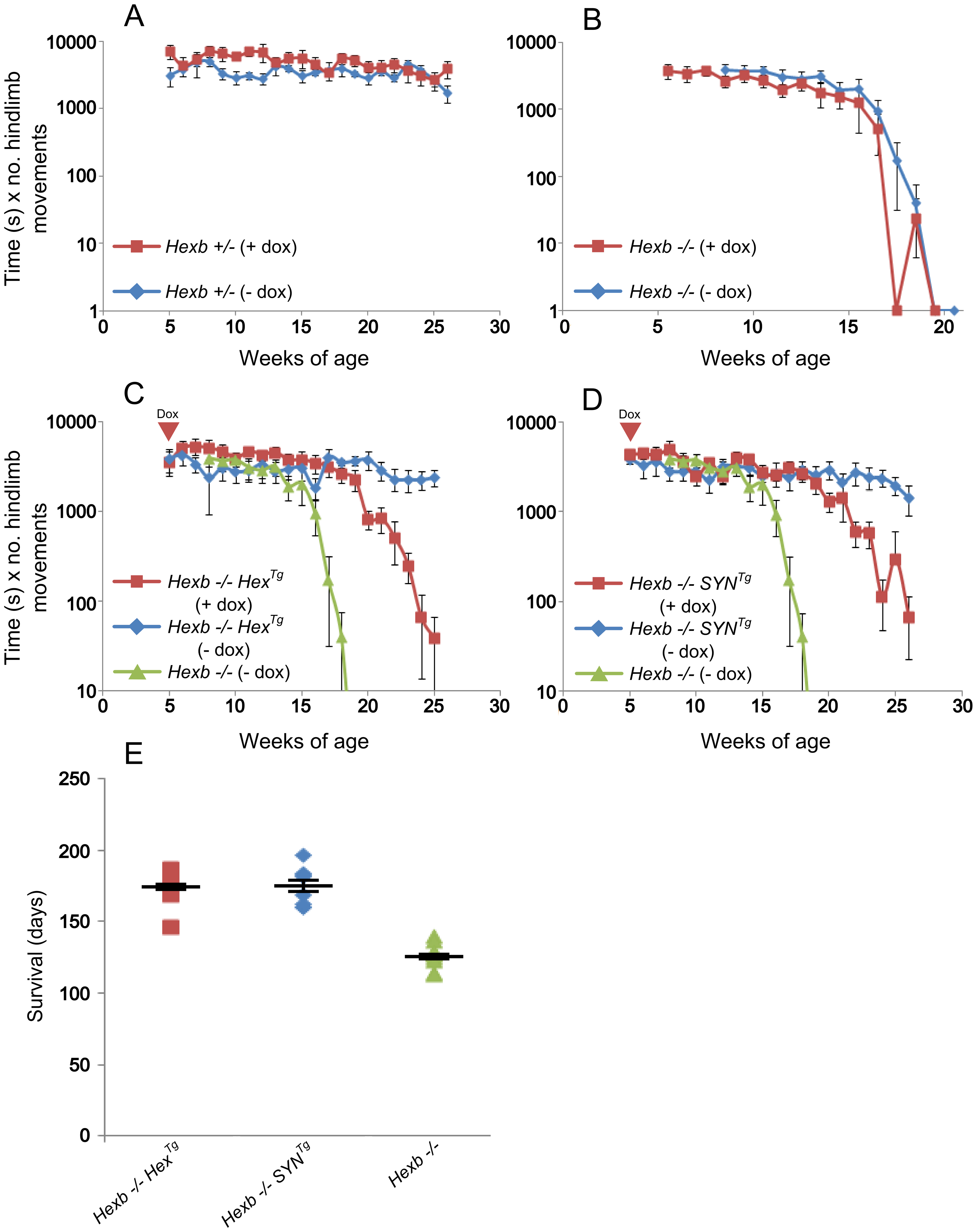 Suppression of <i>Hexb</i> expression results in development of stereotypic Sandhoff disease.