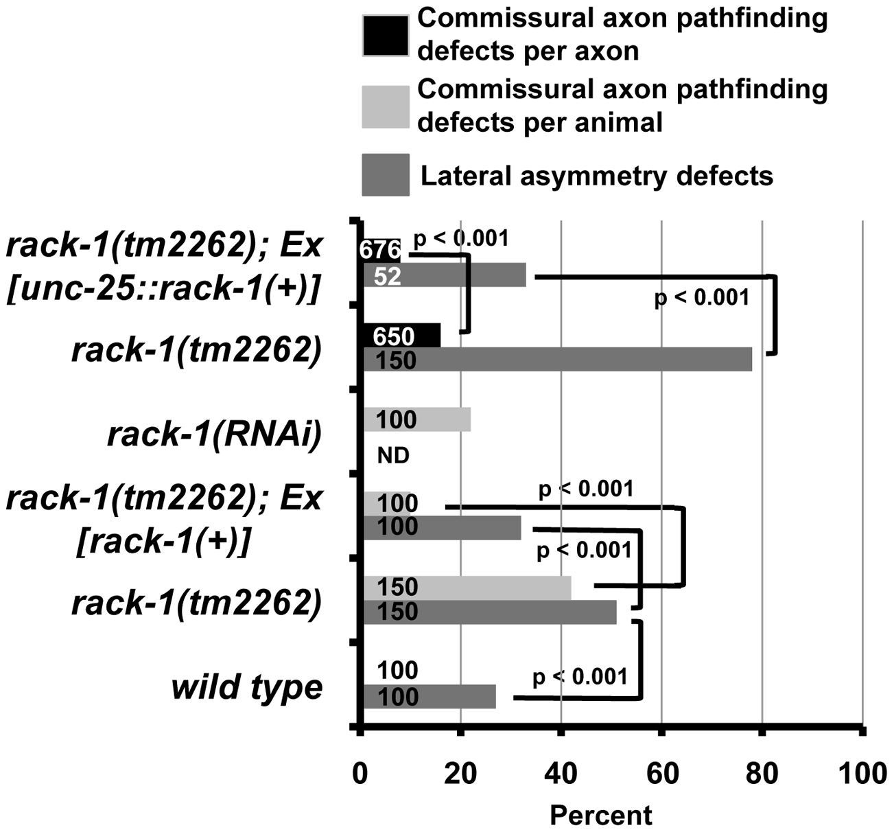 RACK-1 acts cell-autonomously in VD/DD motor axon pathfinding.