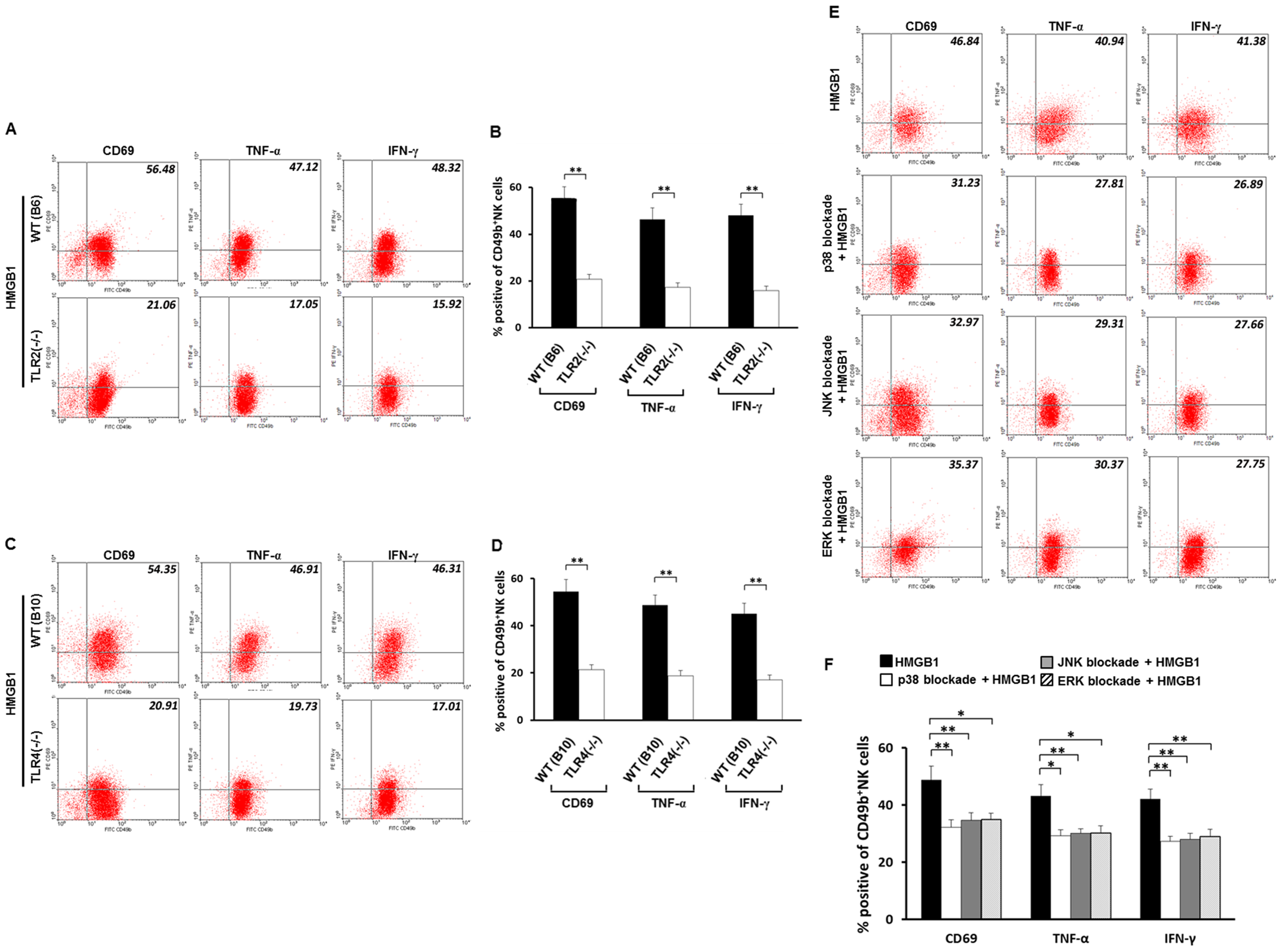 Roles of TLR2, TLR4 and MAPK families in HMGB1-induced activation of NK cells.