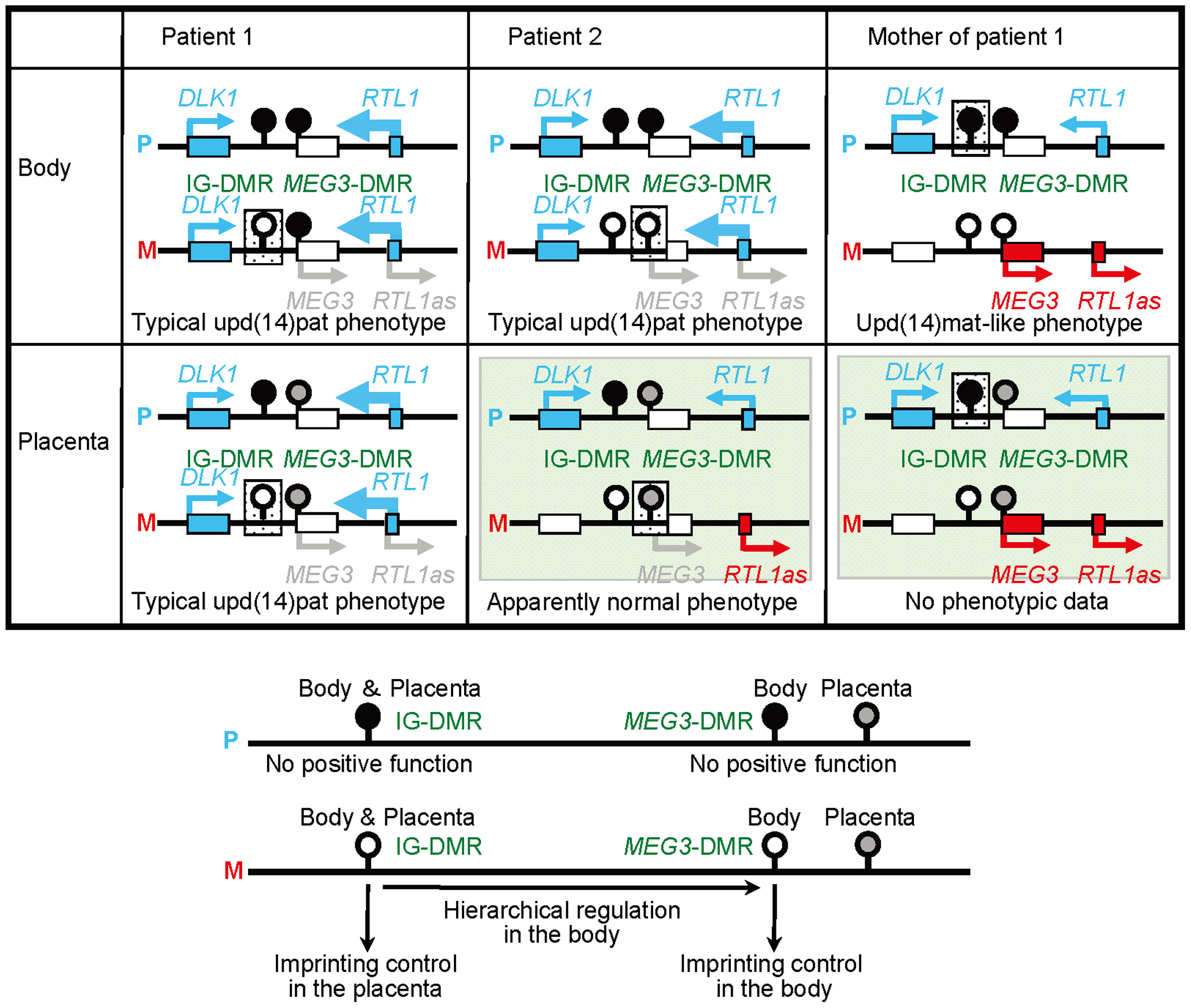 Schematic representation of the observed and predicted methylation and expression patterns.