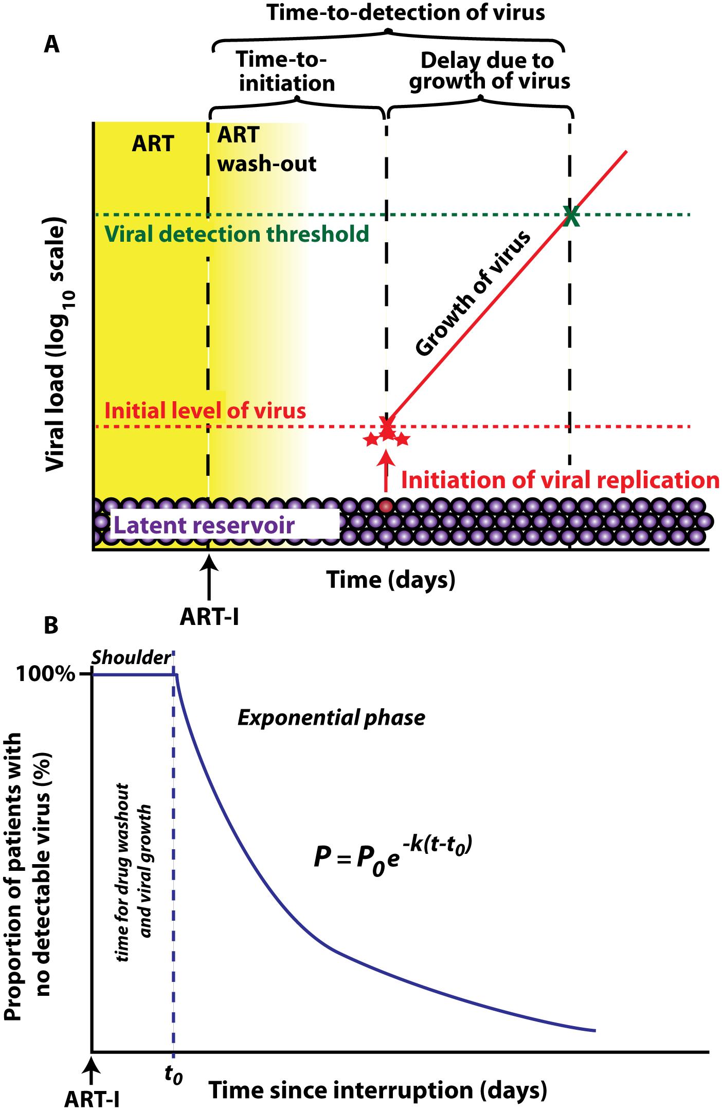 Schematic of viral recrudescence after ART-interruption.