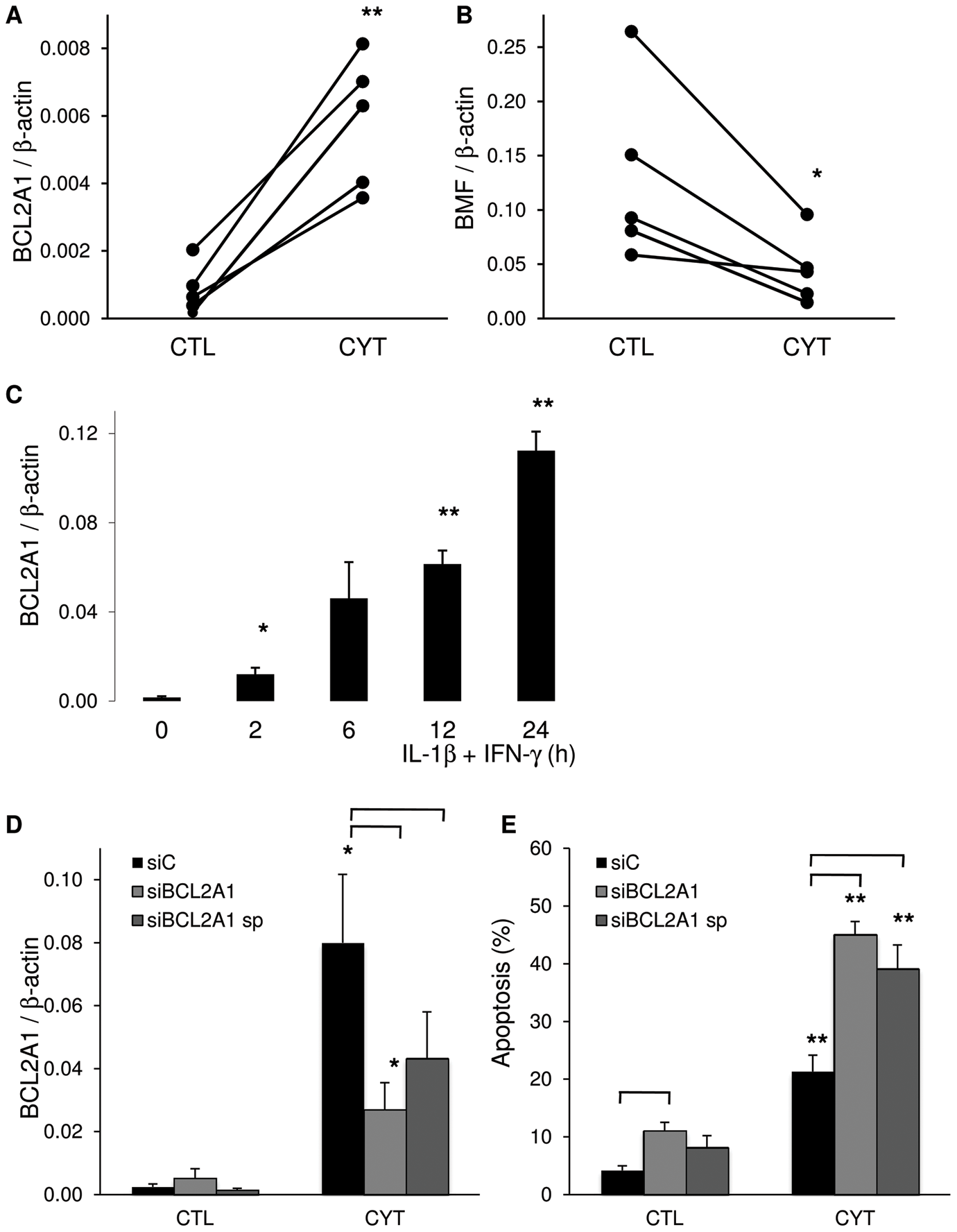IL-1β+IFN-γ modifies BCL2A1 and BMF expression.