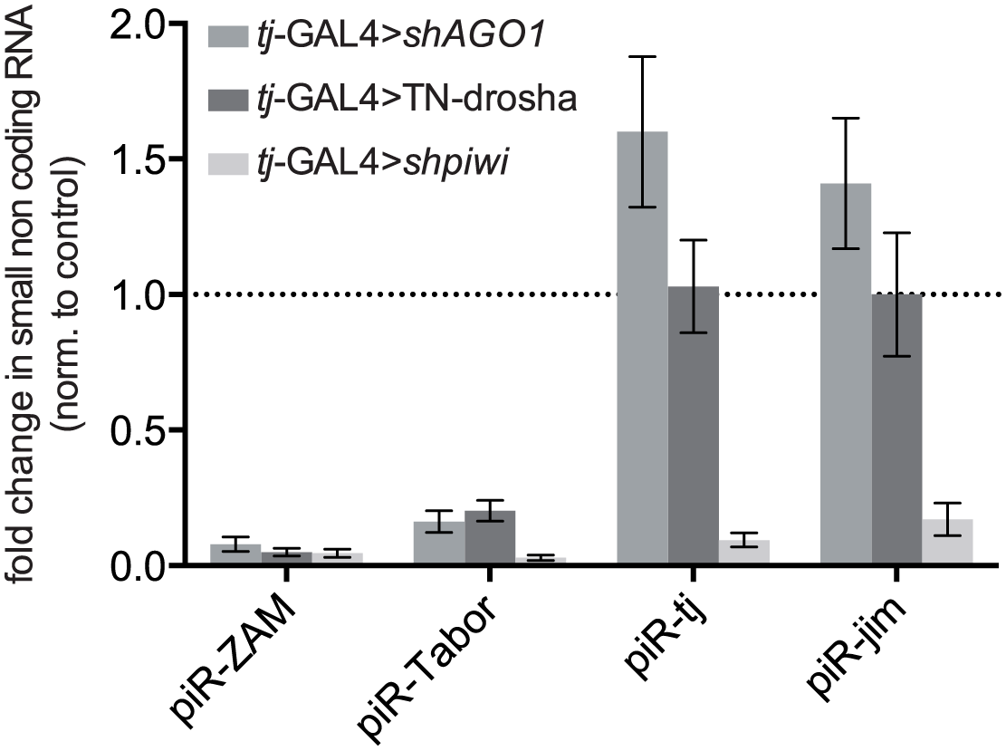 Effect of the impairment of the piRNA and miRNA pathways on the accumulation of four individual piRNAs.