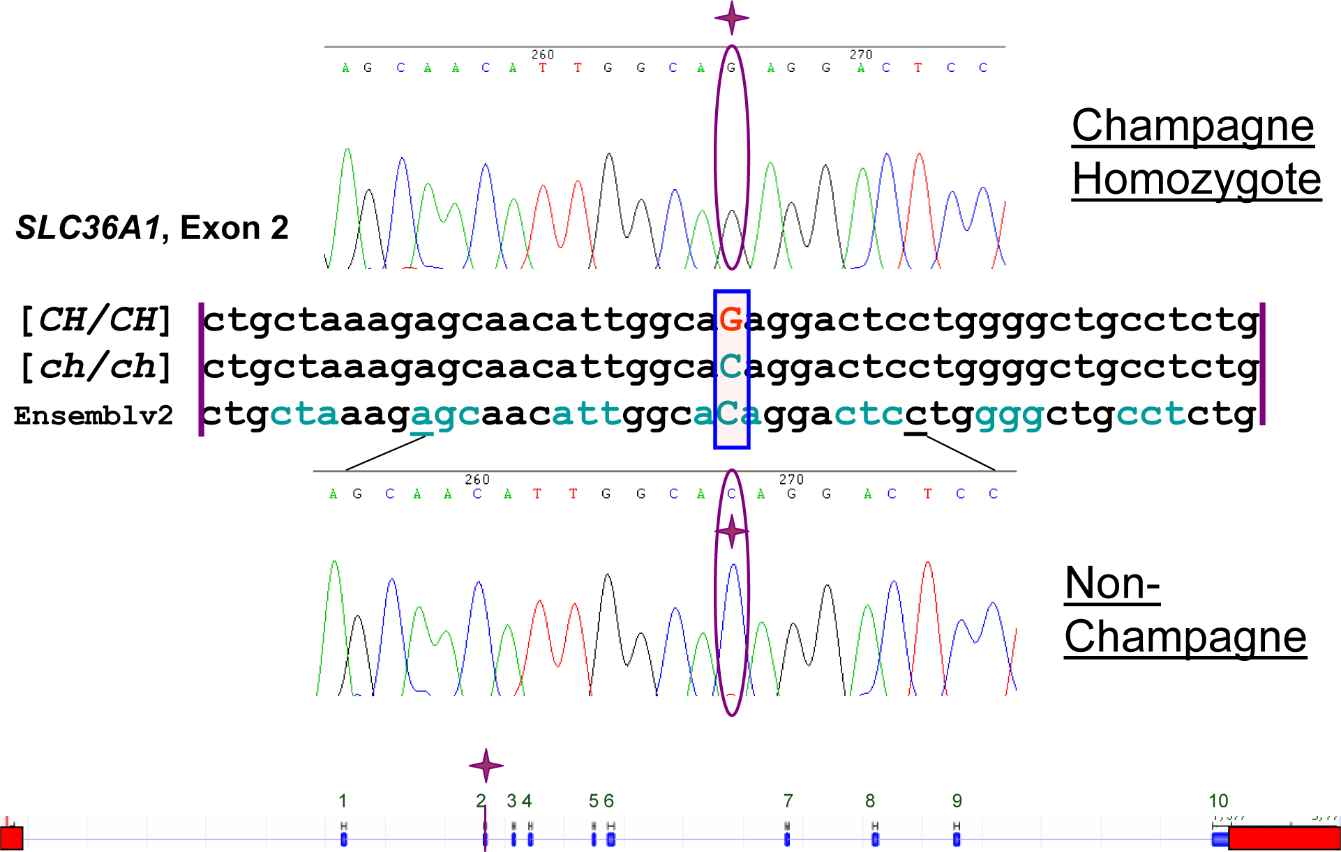 Sequence Alignment and Gene Diagram.